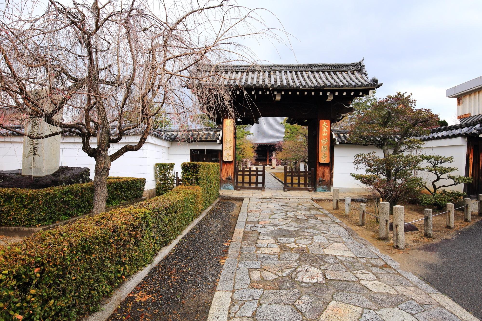 桜の穴場の妙顕寺の山門