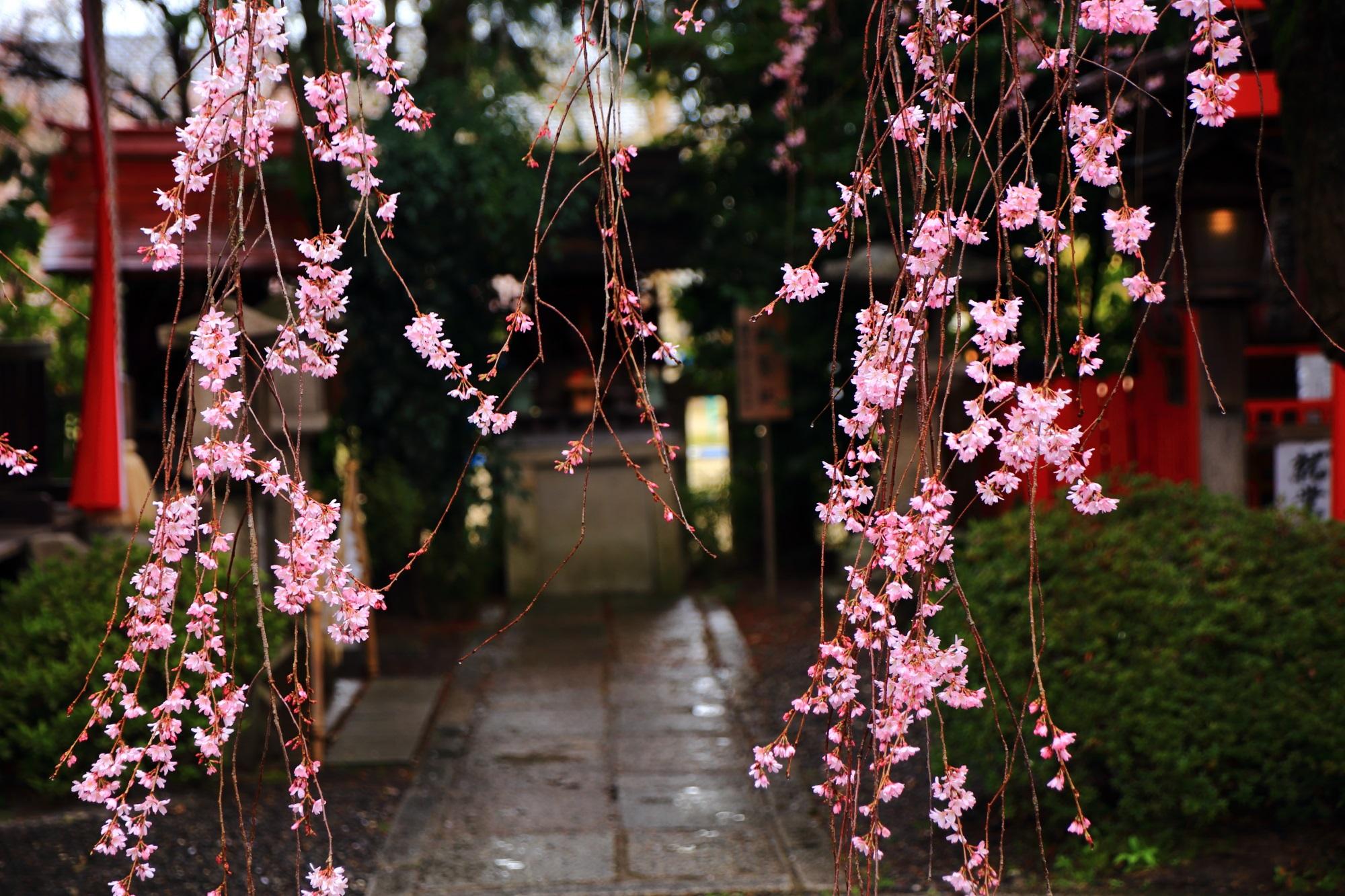 雨に揺らぐ可愛いピンクの花