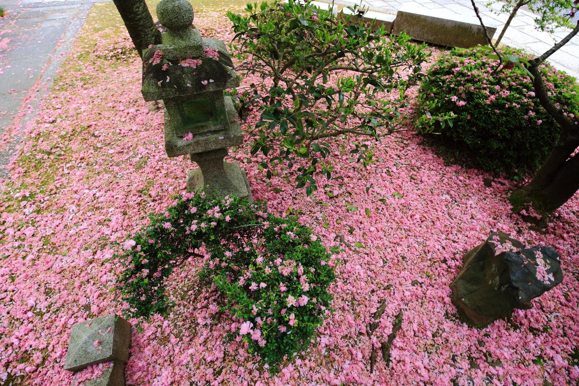敢えて掃除をしないお寺の方の心意気による散り桜