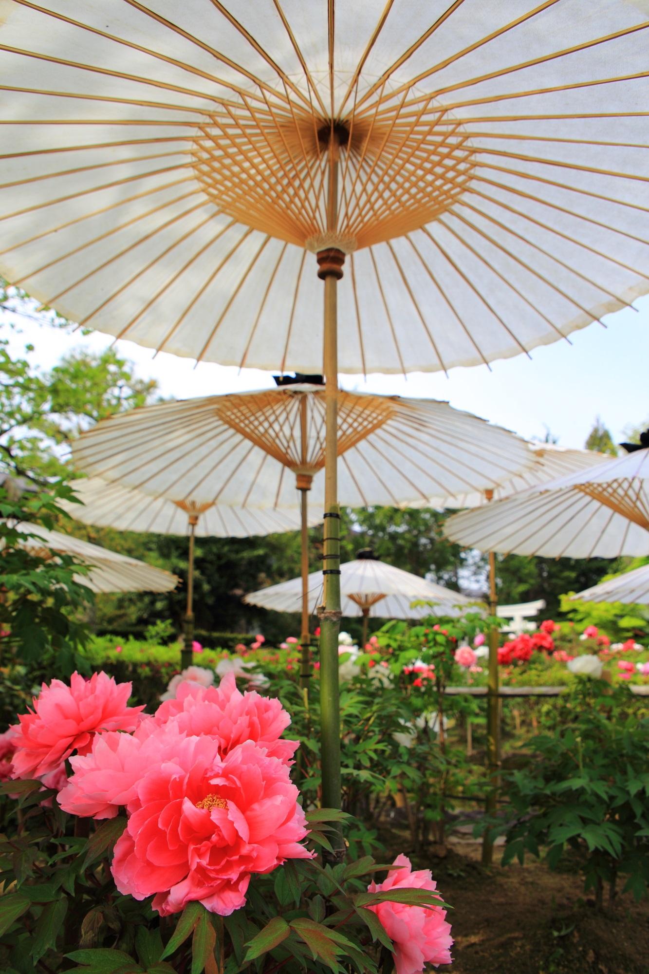 結構わがままな牡丹の花と和傘