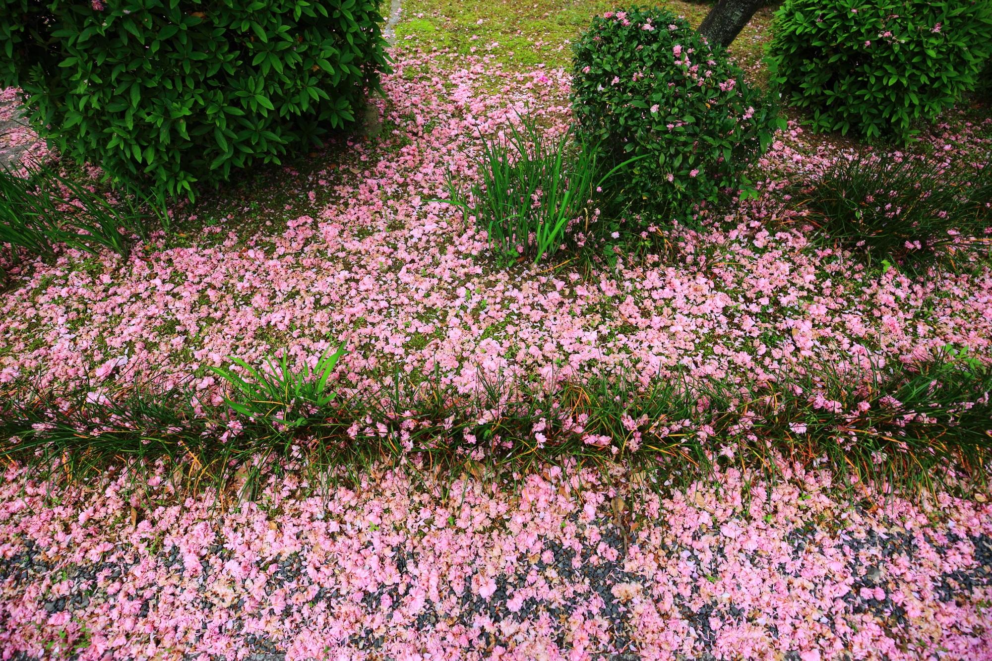 予想外の春の華やかな彩り