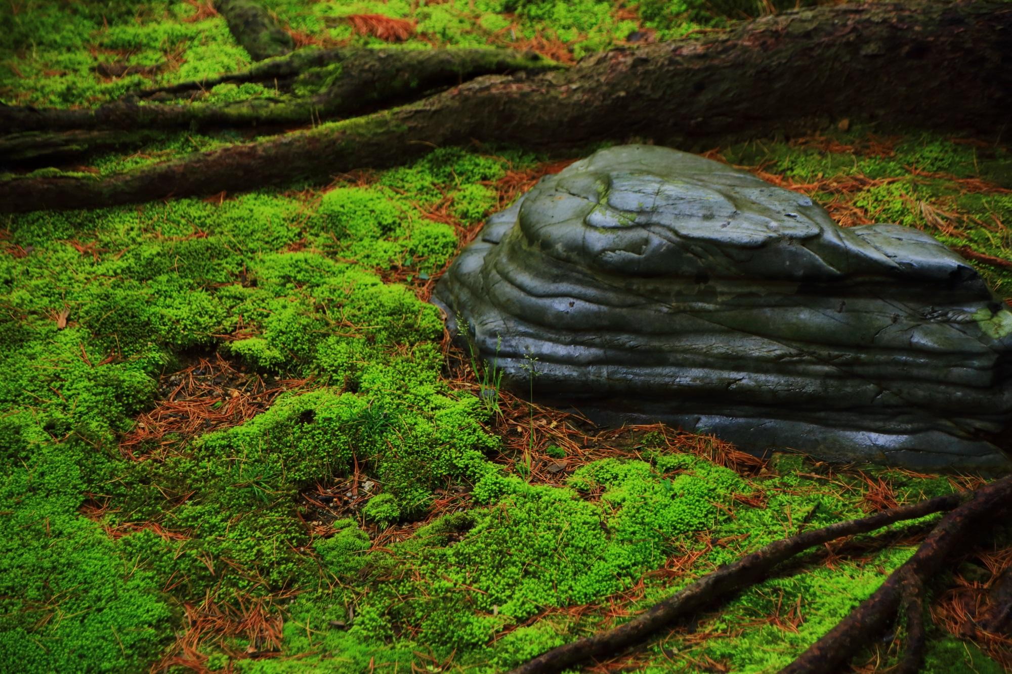 木の根の横の独特の岩と淡く深い苔