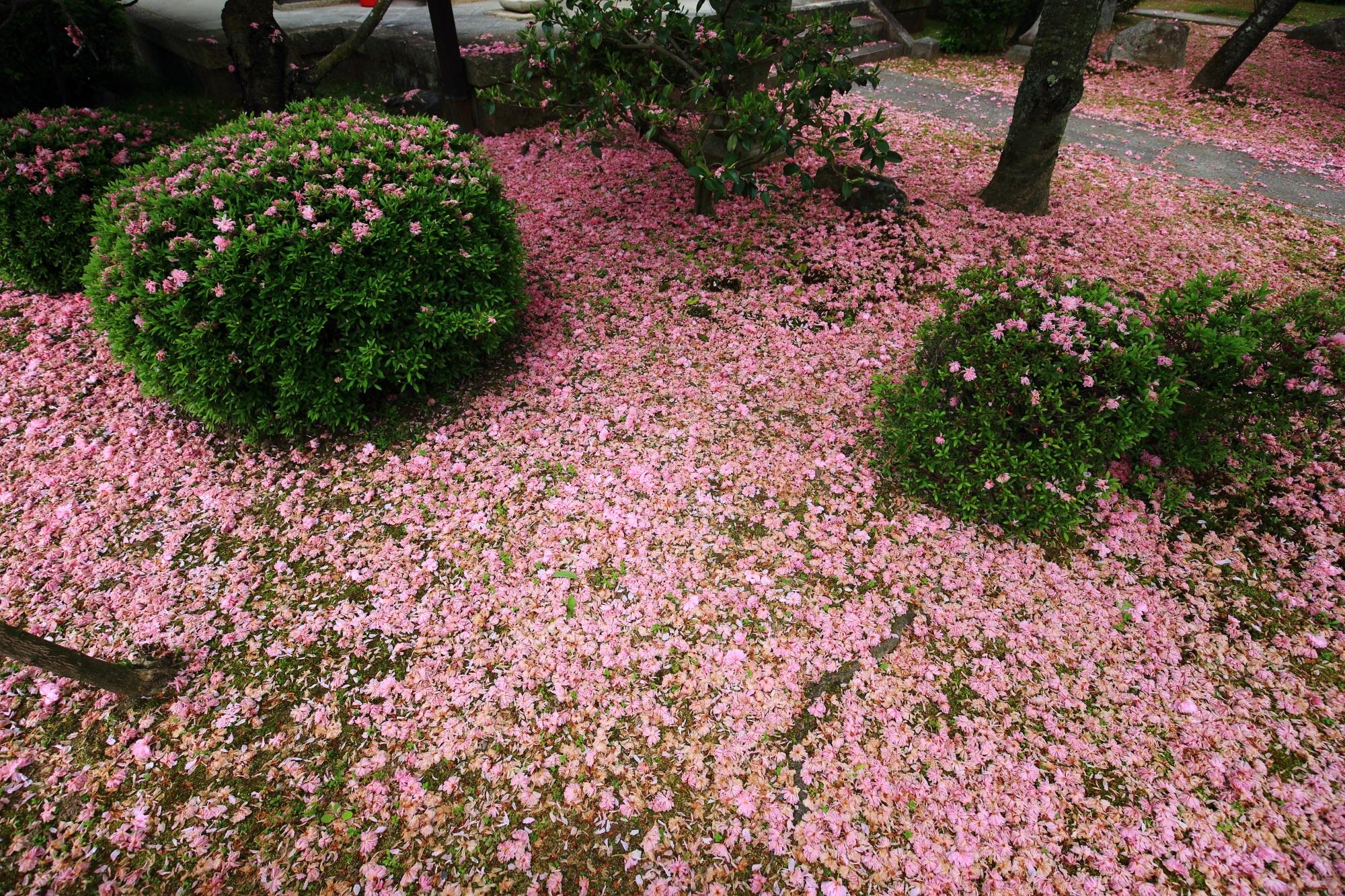 緑の刈り込みが浮かぶようなピンクの絨毯