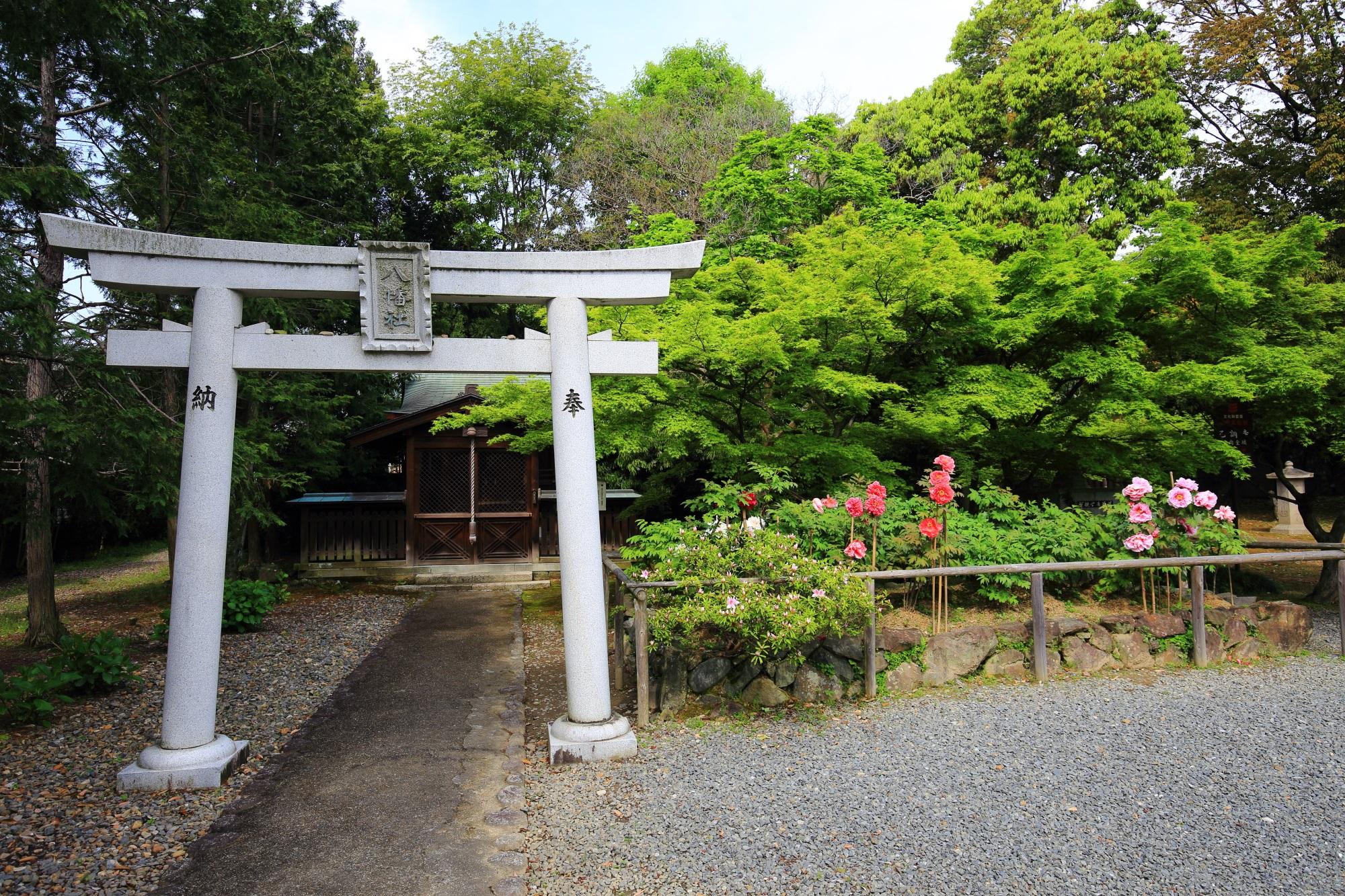 乙訓寺の末社の八幡社と付近の牡丹