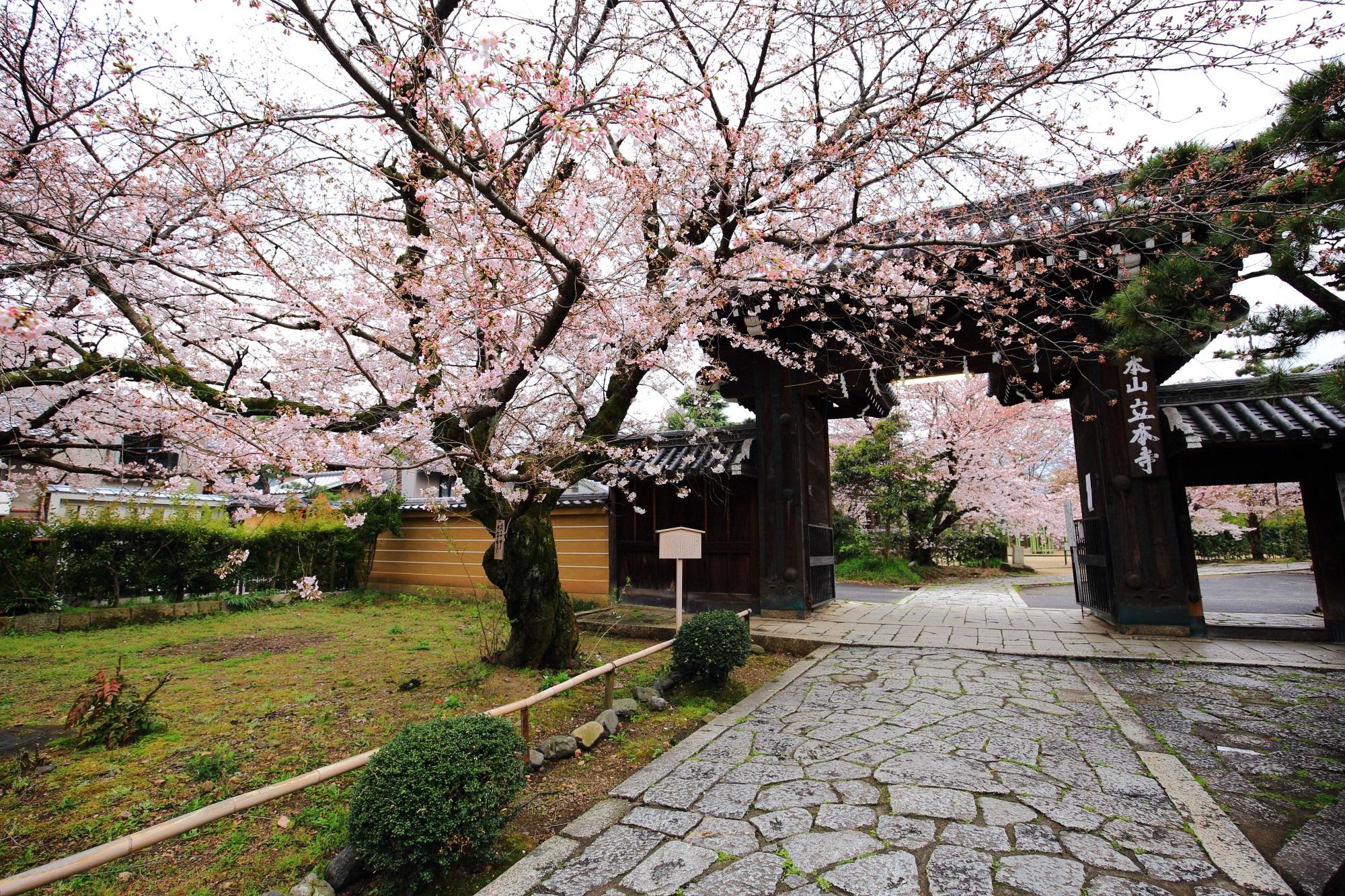 石畳の参道と木造の山門が演出する桜