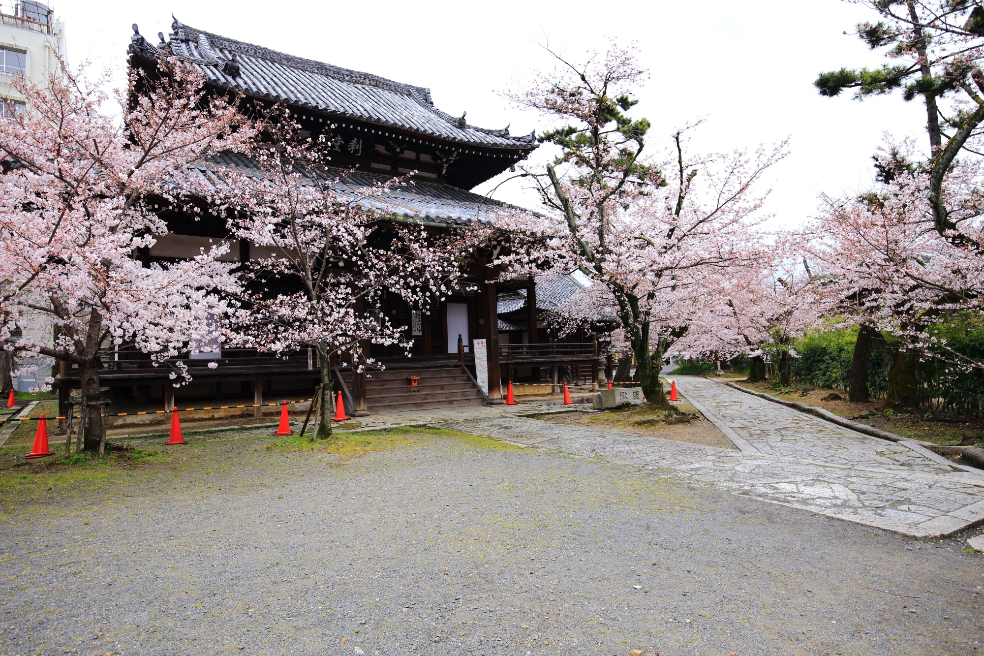 立本寺の刹堂(鬼子母神堂)と桜