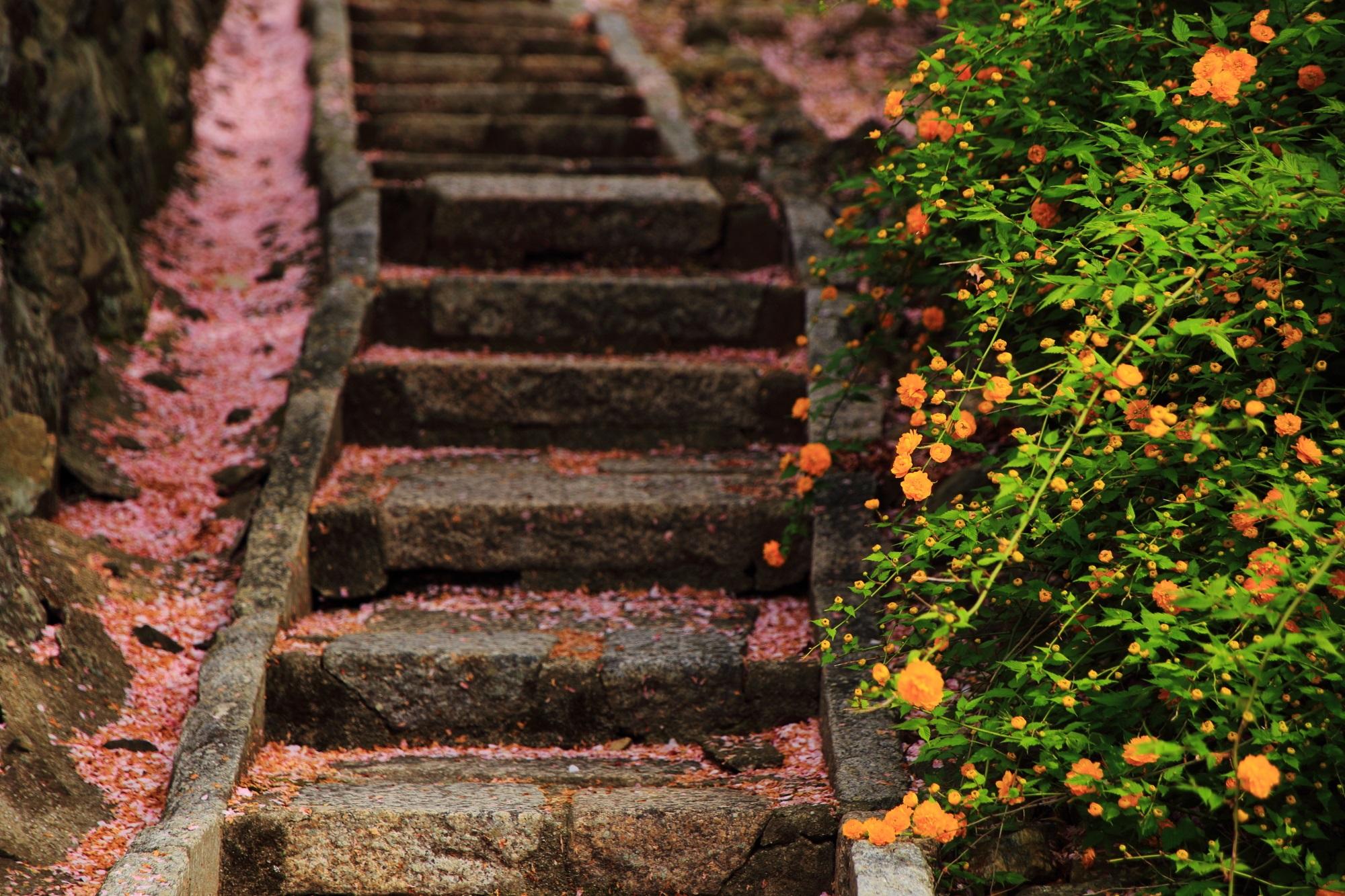 山吹と散り桜