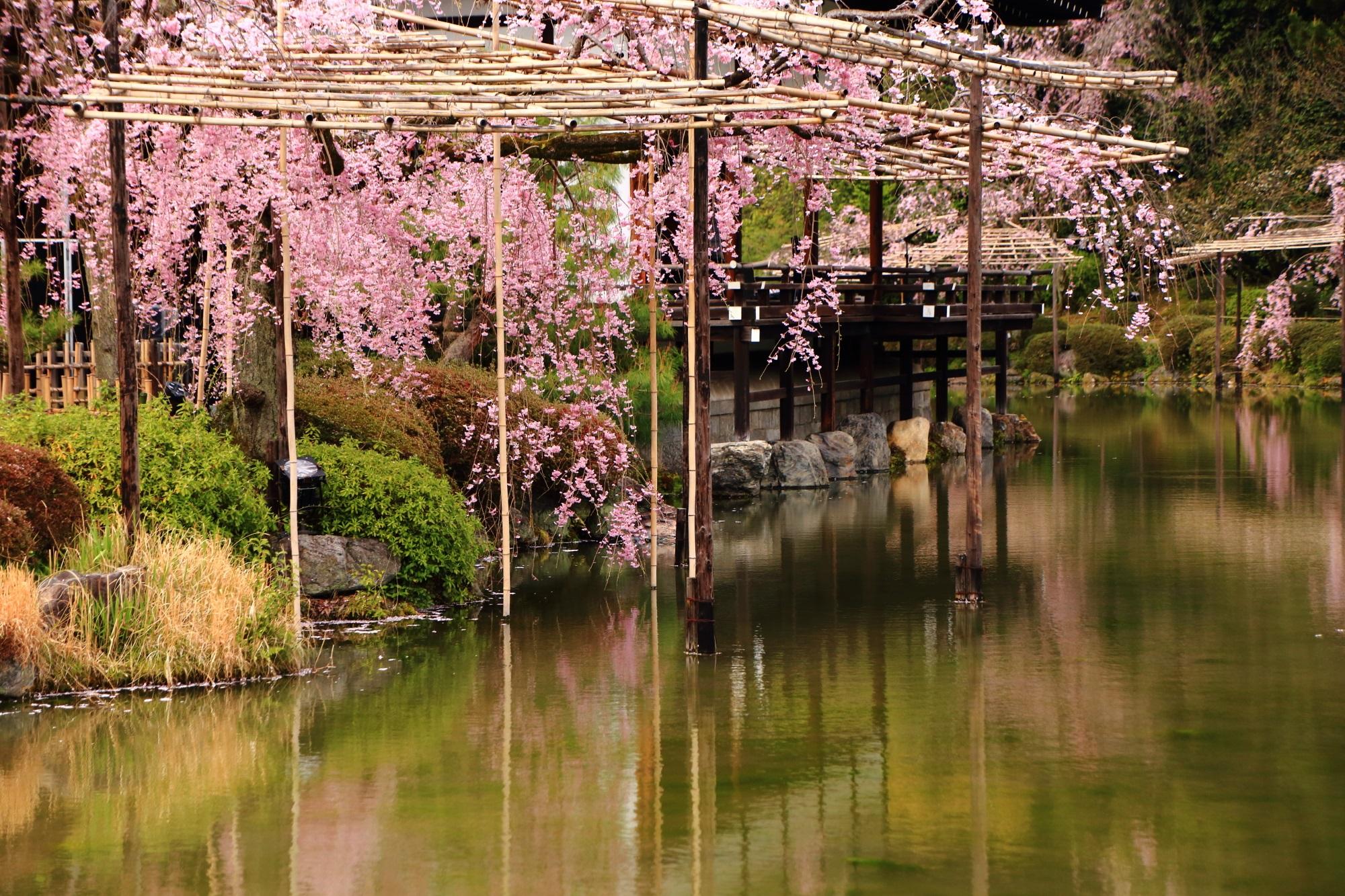 ピンクにそまる水の庭園