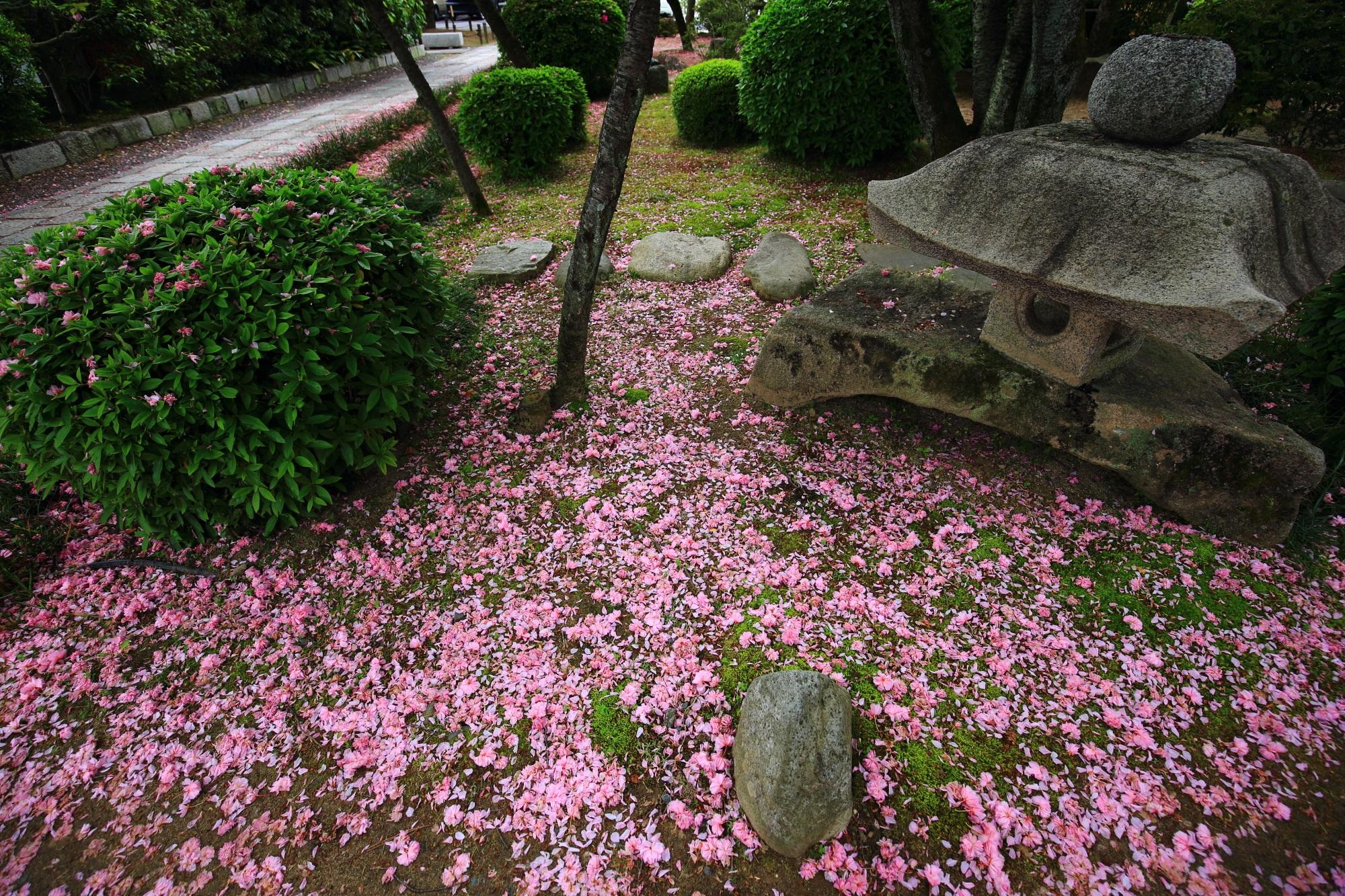 桜のピンクの絨毯
