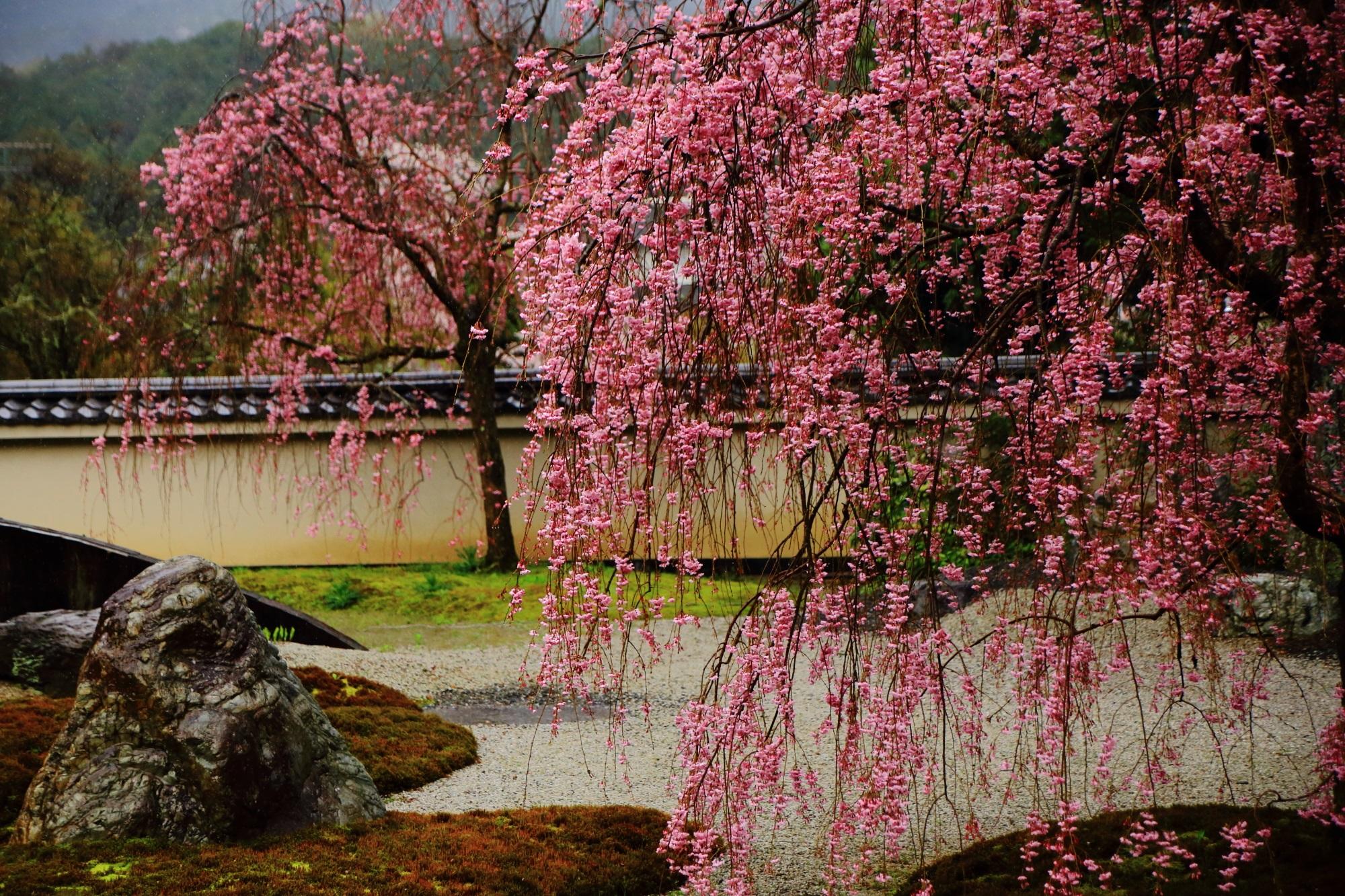 春は桜の穴場となる洛北名所