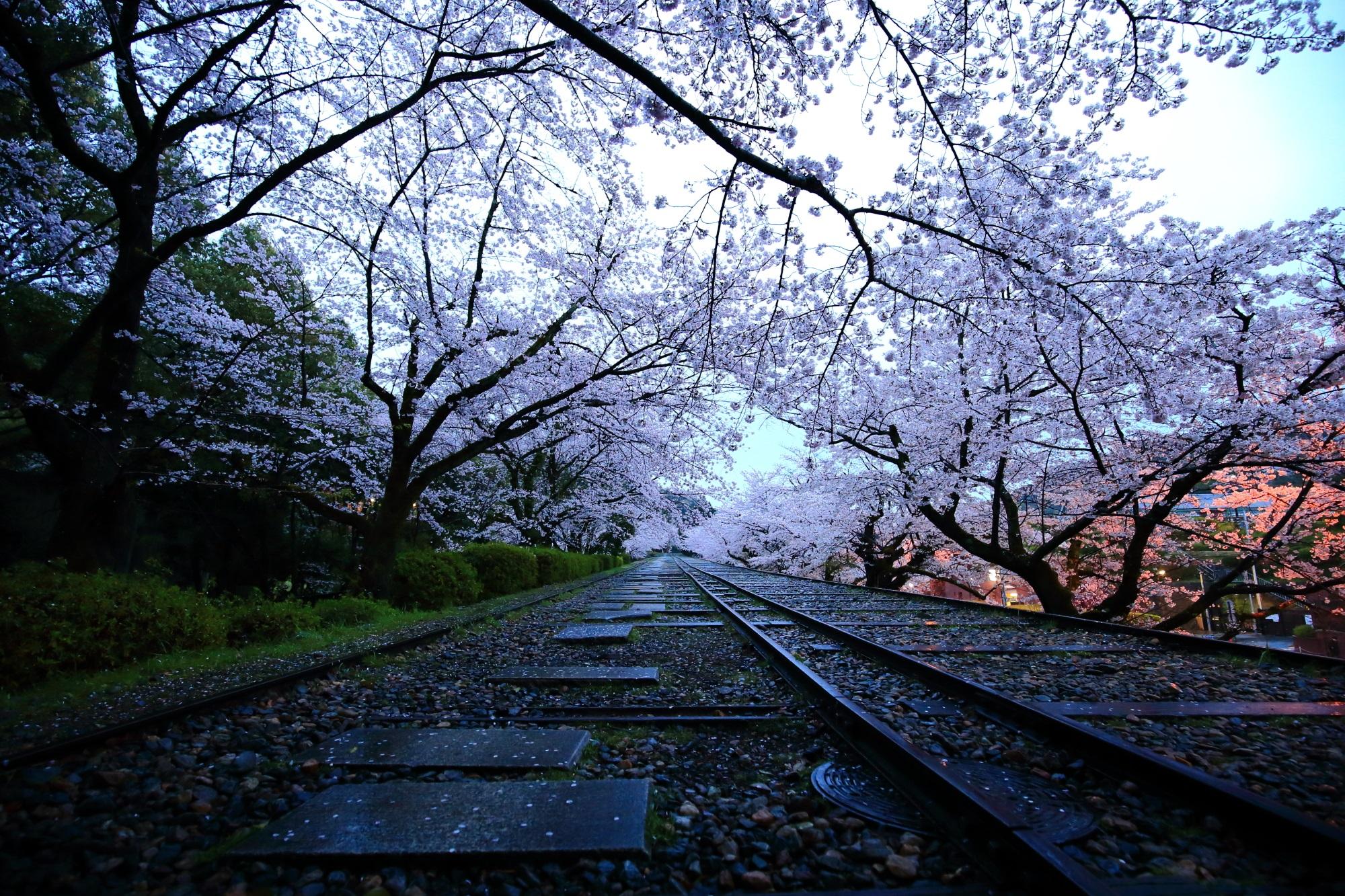 誰もいない線路と桜並木