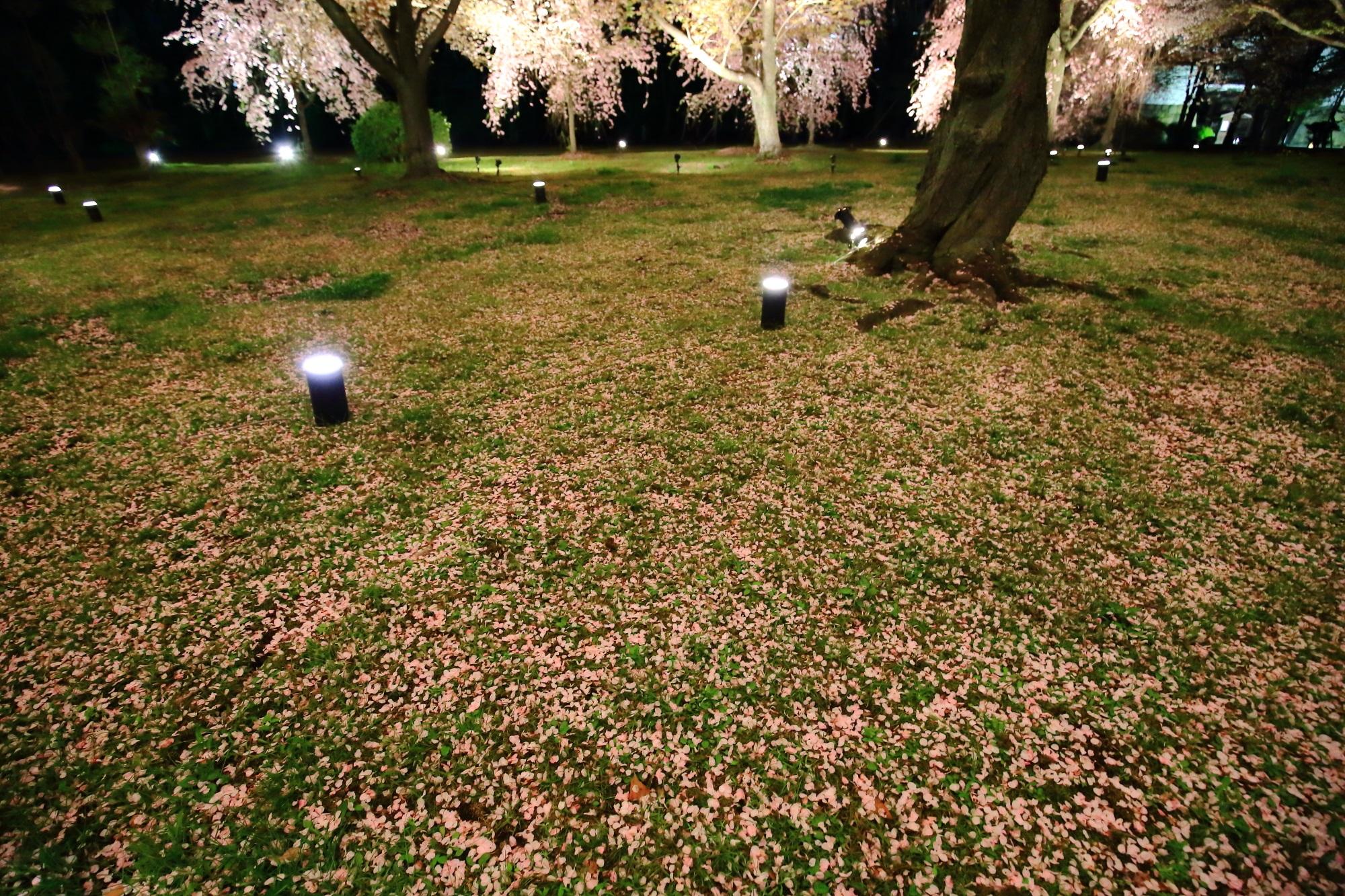 闇夜に浮かび上がる八重桜と散り桜