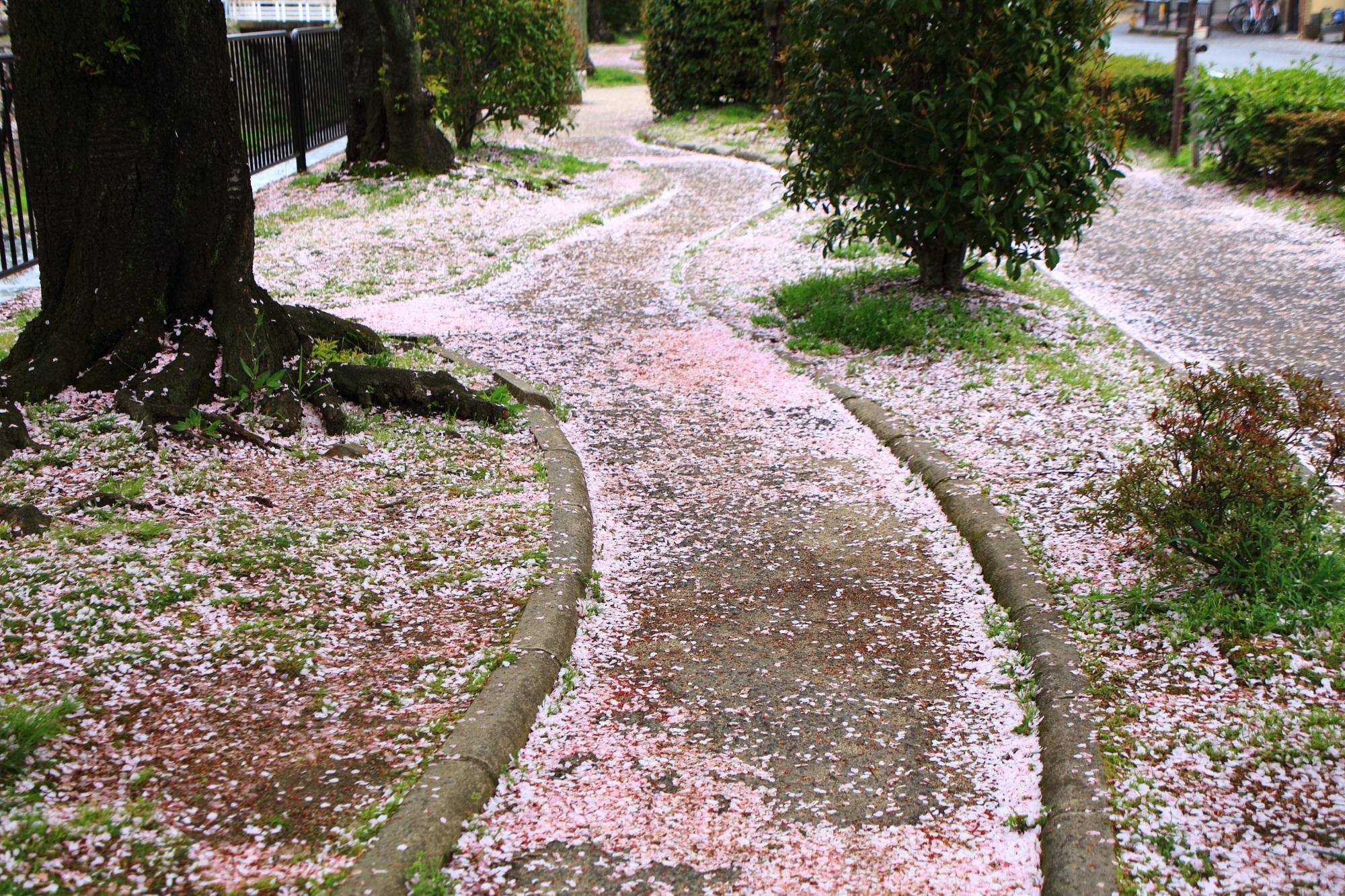 華やかなピンクの桜の道