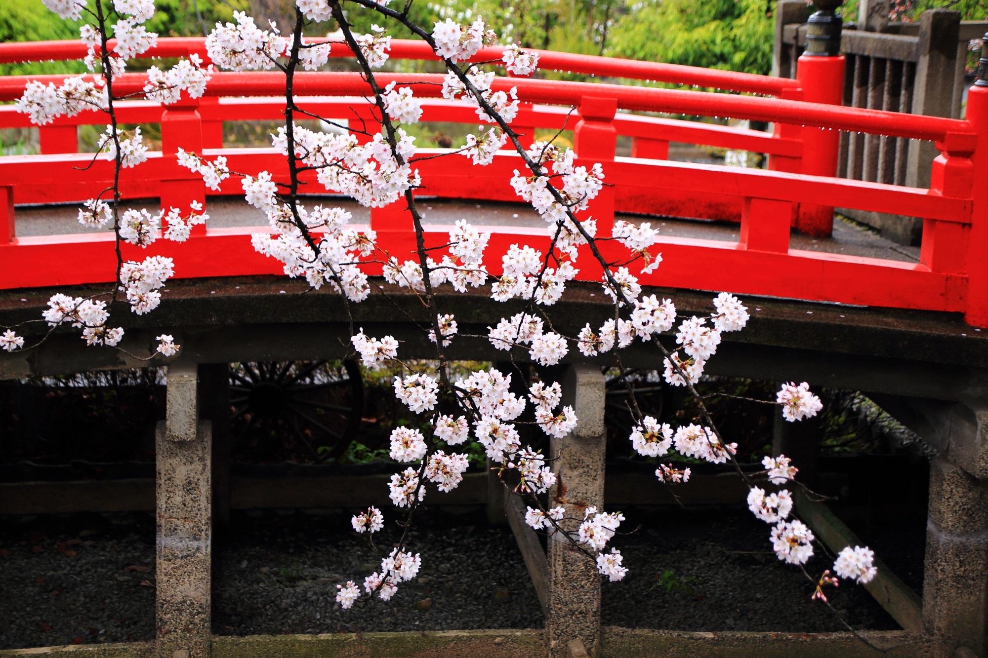 雨に華やぐ風情ある桜
