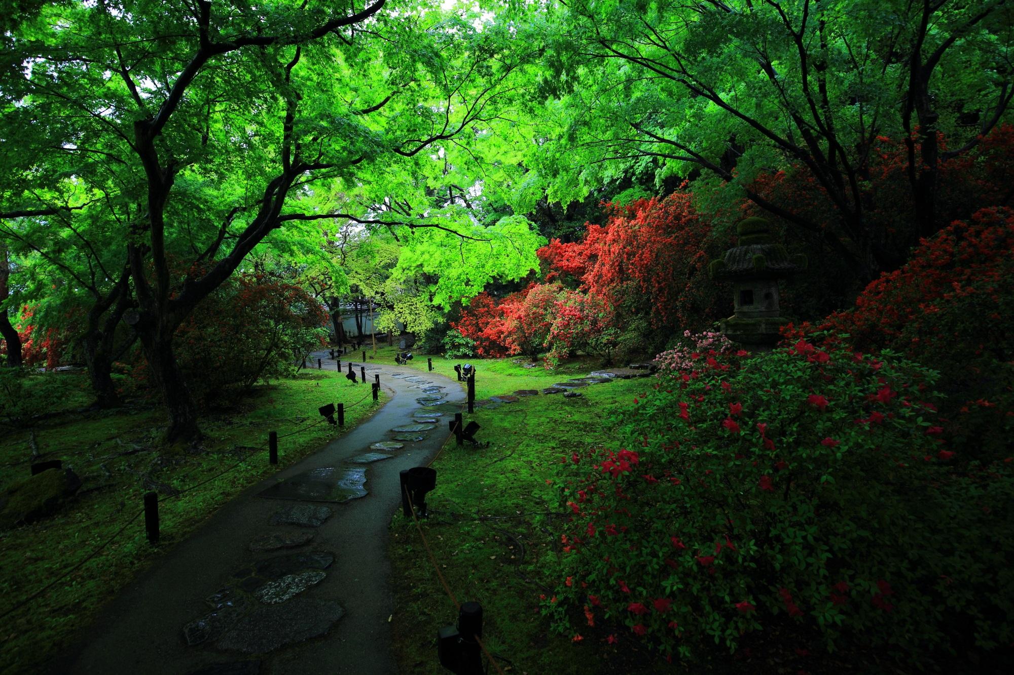 青蓮院 きりしまつつじ 鮮やかな新緑と鮮烈な赤