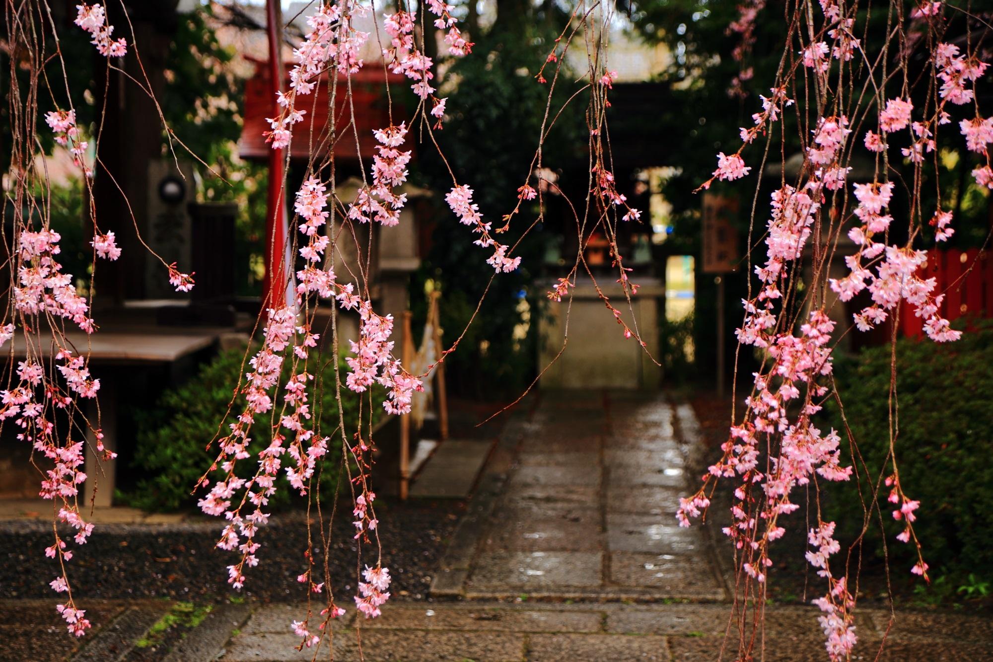 街中のしだれ桜の穴場
