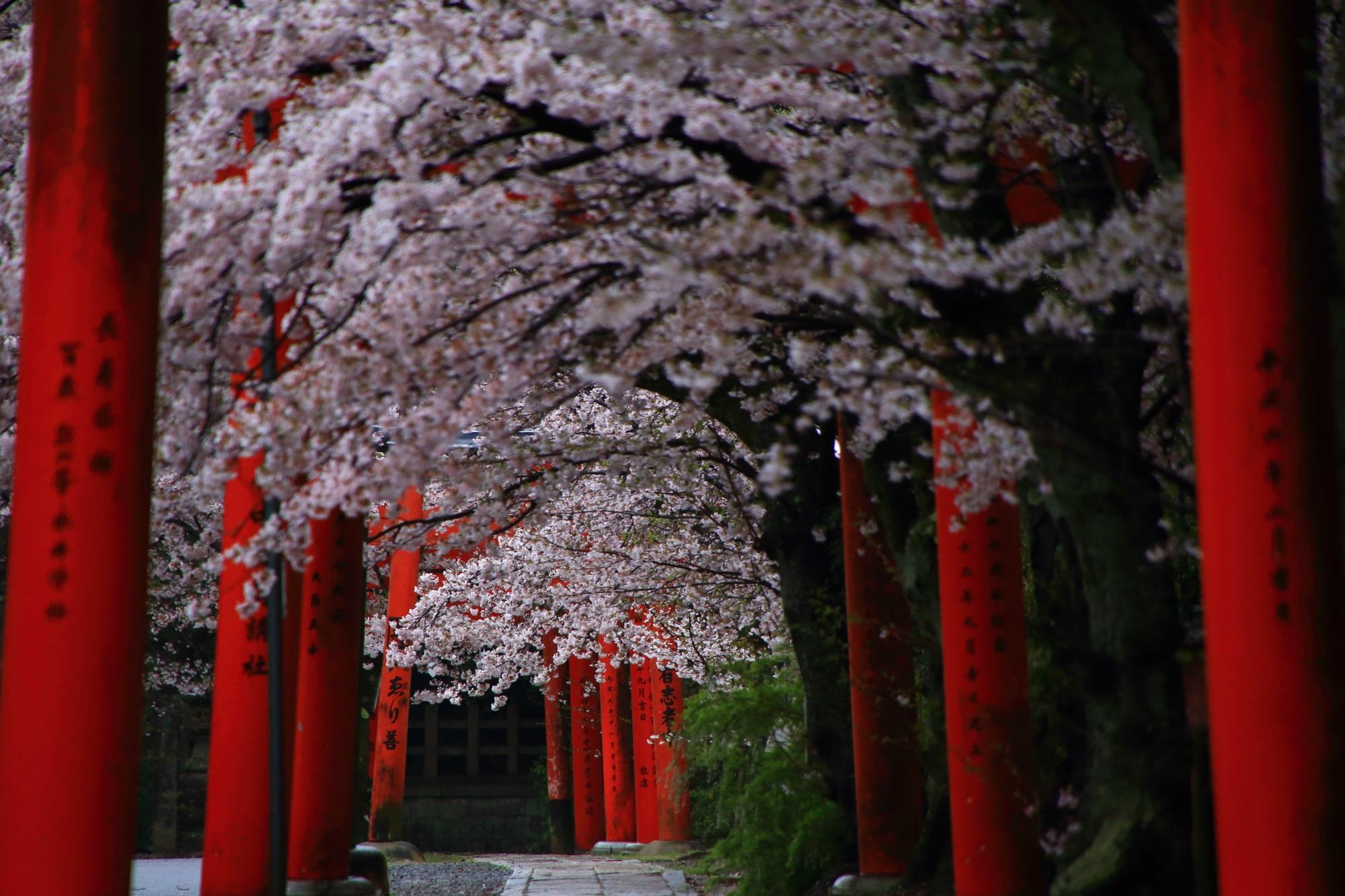 風情ある鳥居の並ぶ桜の穴場