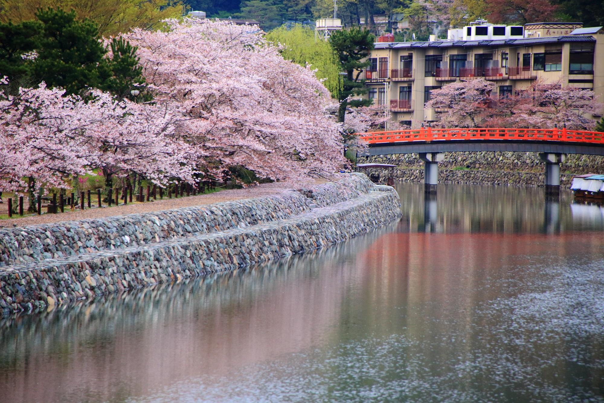 春の情緒ある水辺の彩り