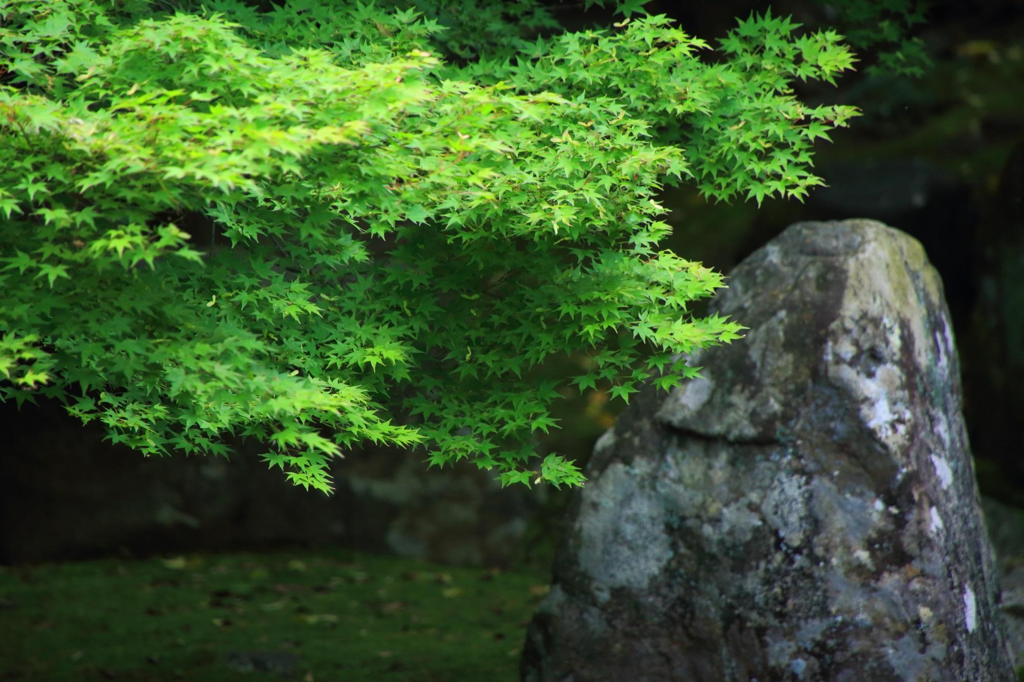 新緑 蓮華寺 庭園 美しい
