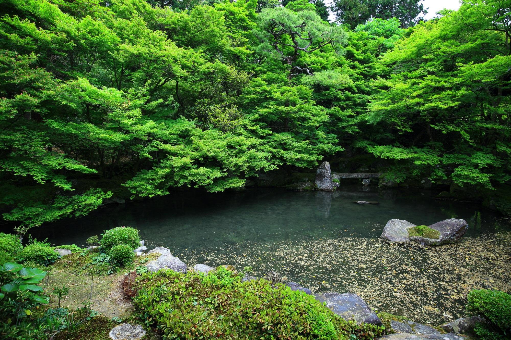 蓮華寺の池泉式庭園の綺麗な新緑