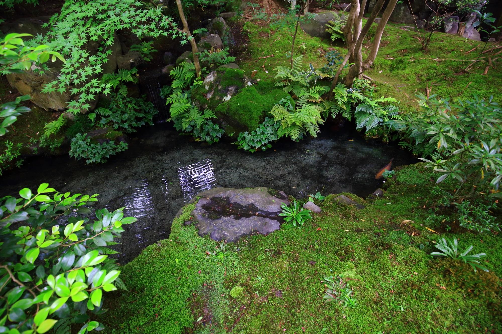 るりこういんの玄関前の綺麗な池と苔
