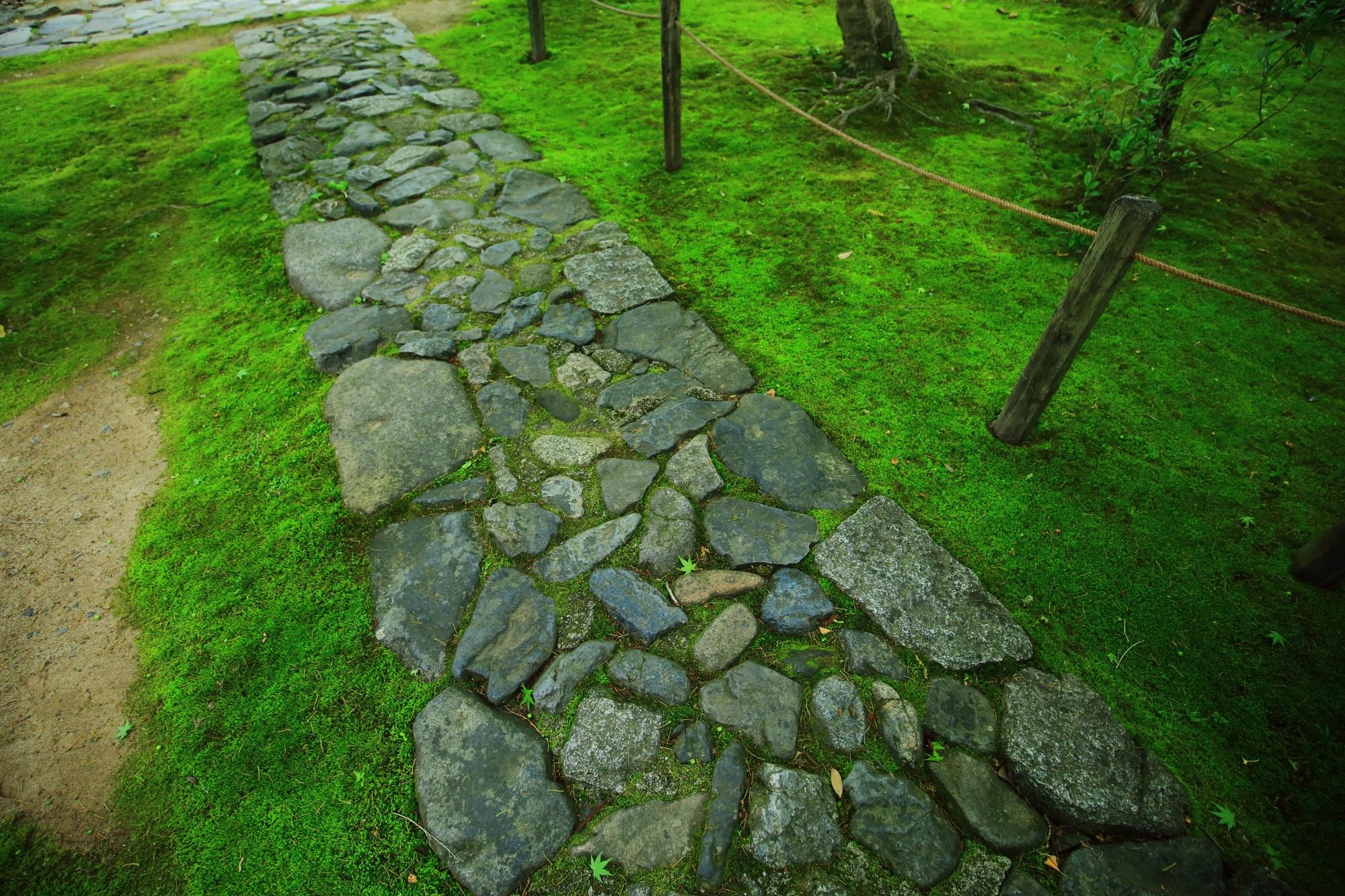 れんげじ 苔 緑 参道