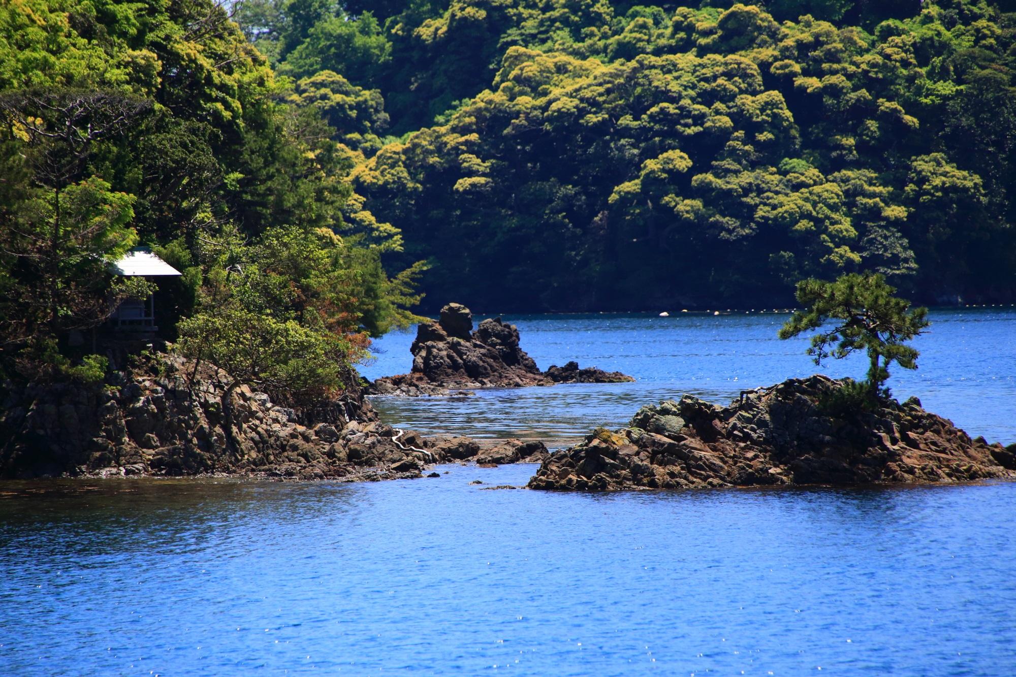 伊根湾の青島にある神社と岩場で育つ木