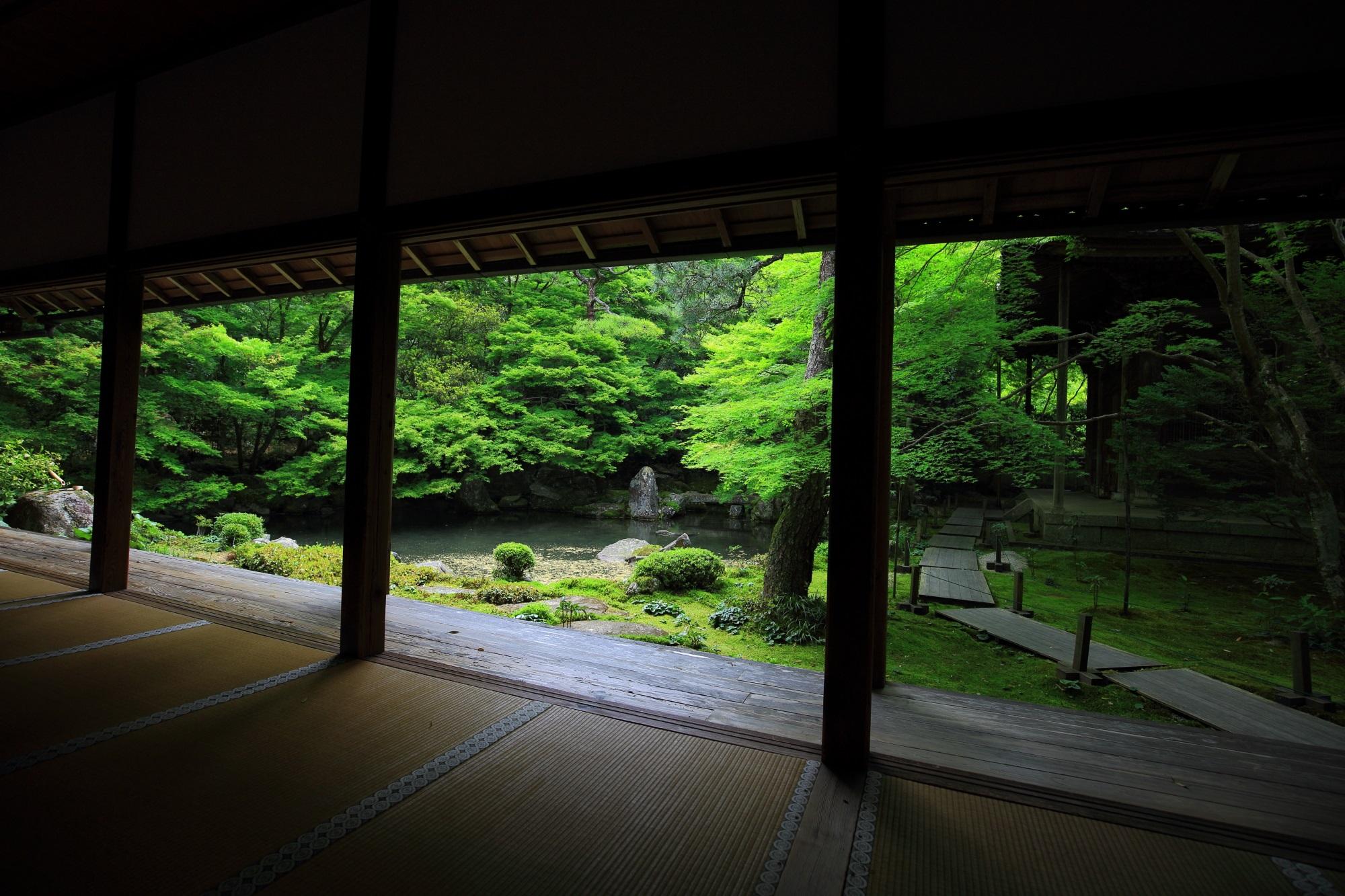 青もみじ 蓮華寺 緑 綺麗 庭園