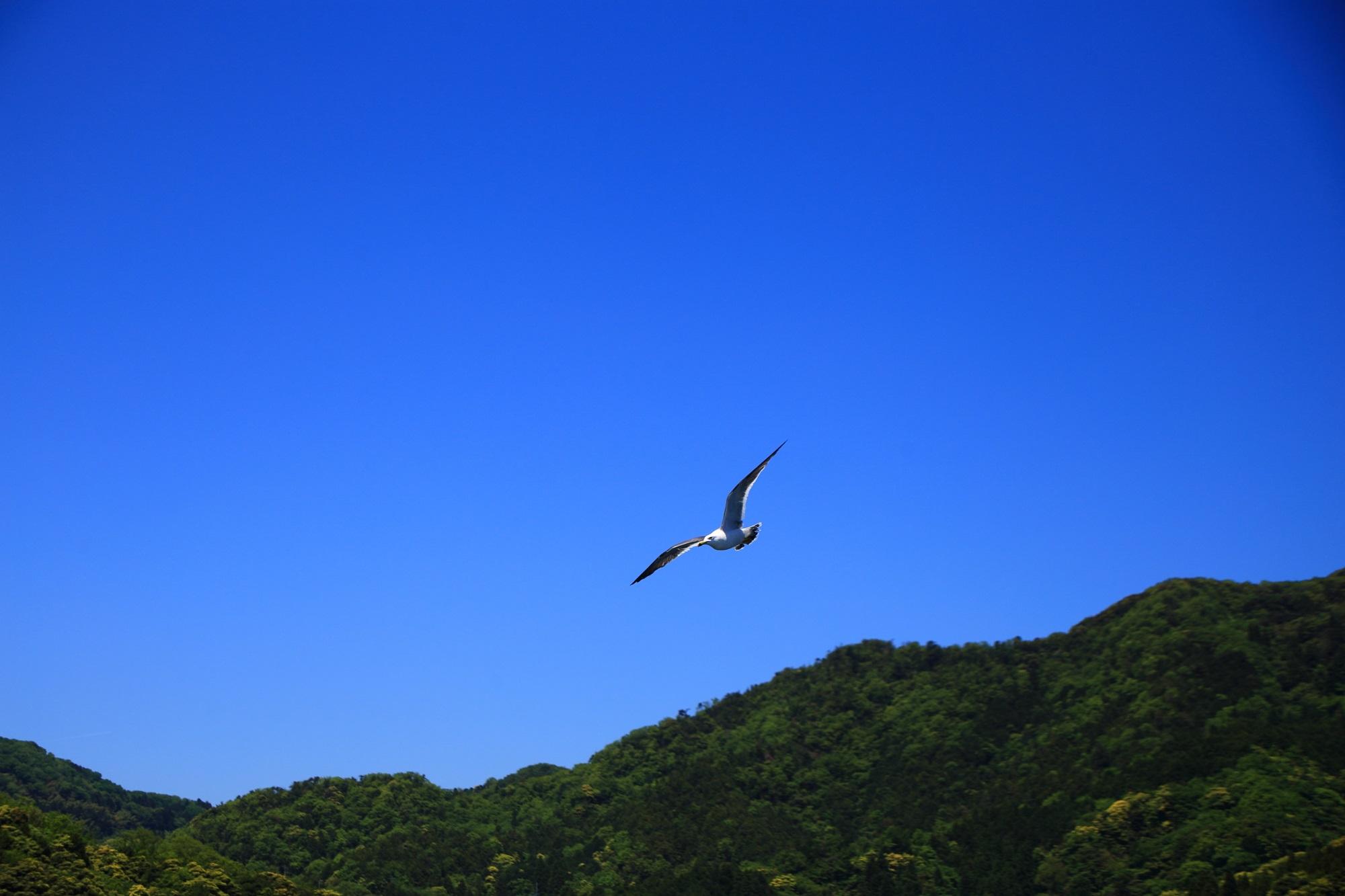 青空を羽ばたく遊覧船についてくる伊根のカモメ