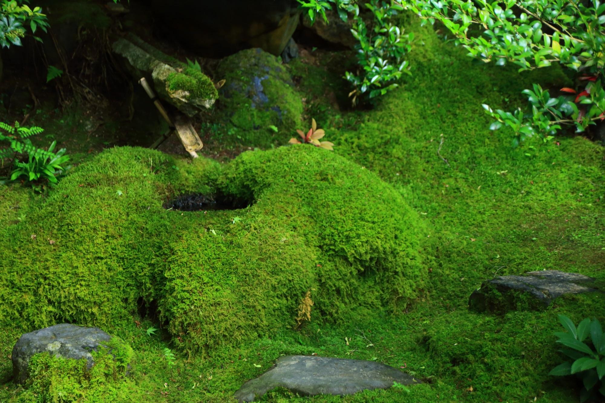 瑠璃光院の苔に覆われた見事な庭園