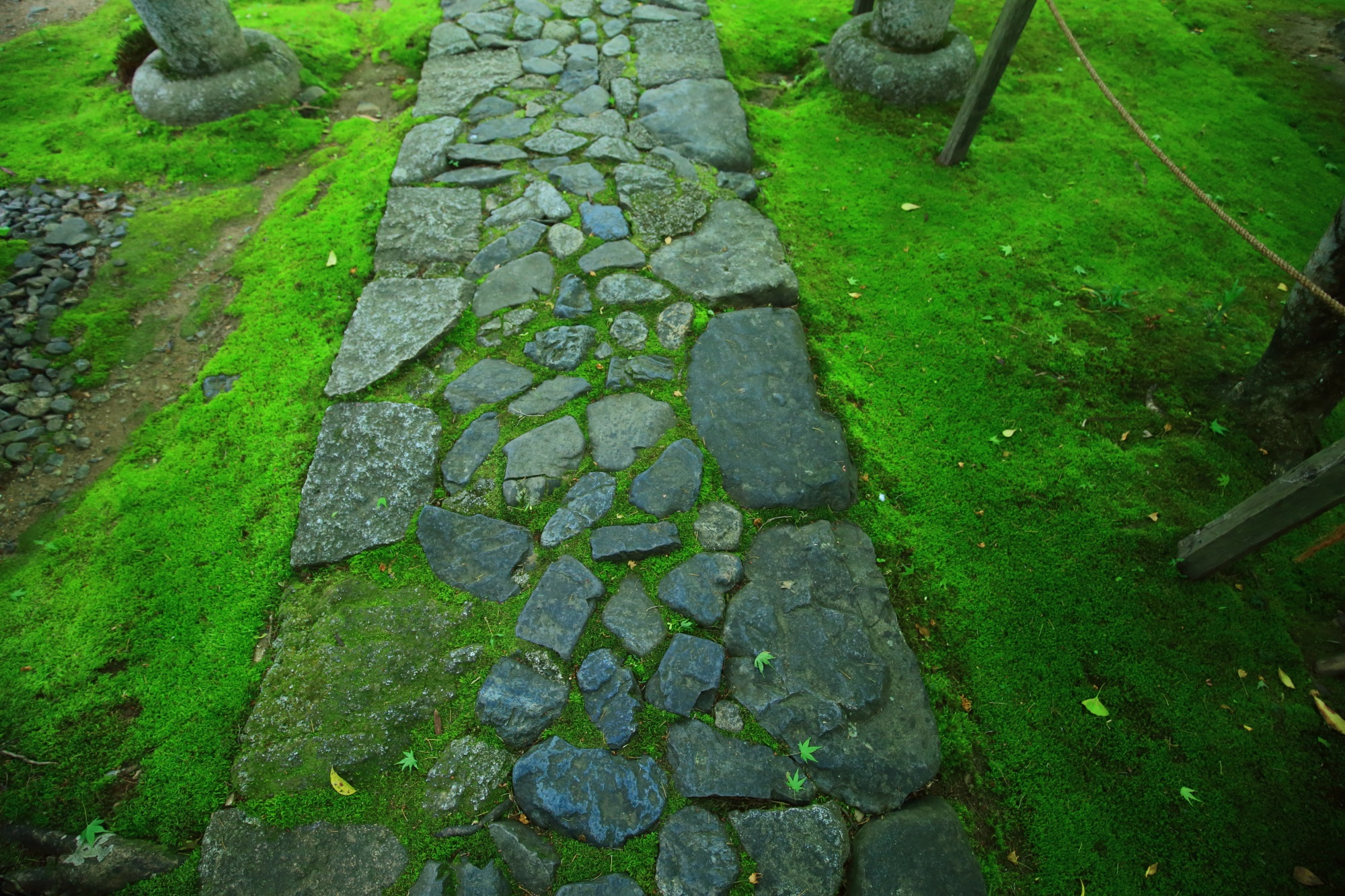 れんげじの美しい緑の苔と参道