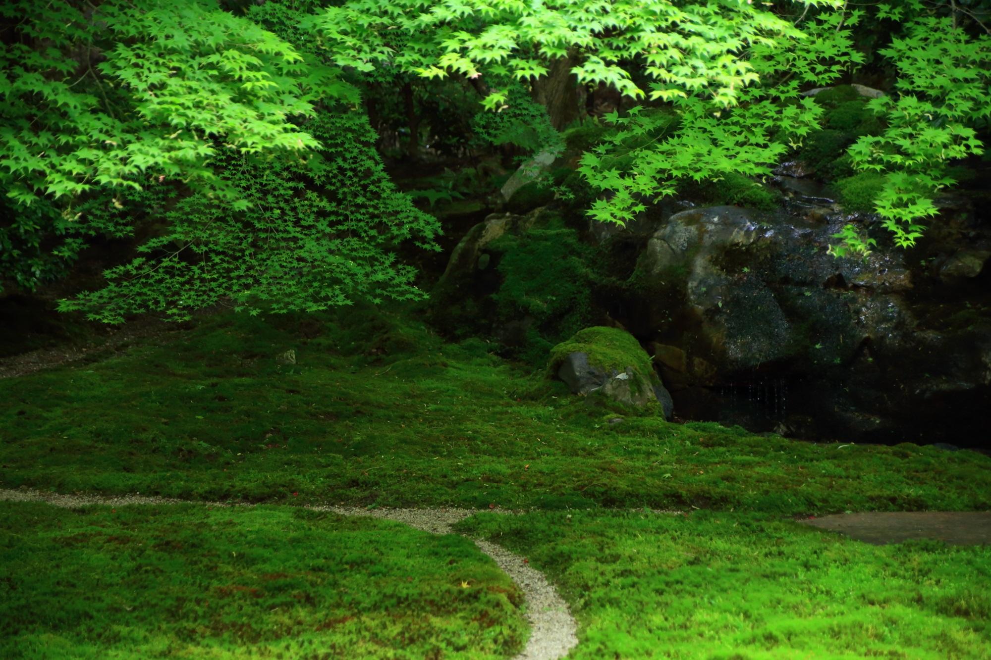 高画質 瑠璃光院 写真 瑠璃の庭 綺麗