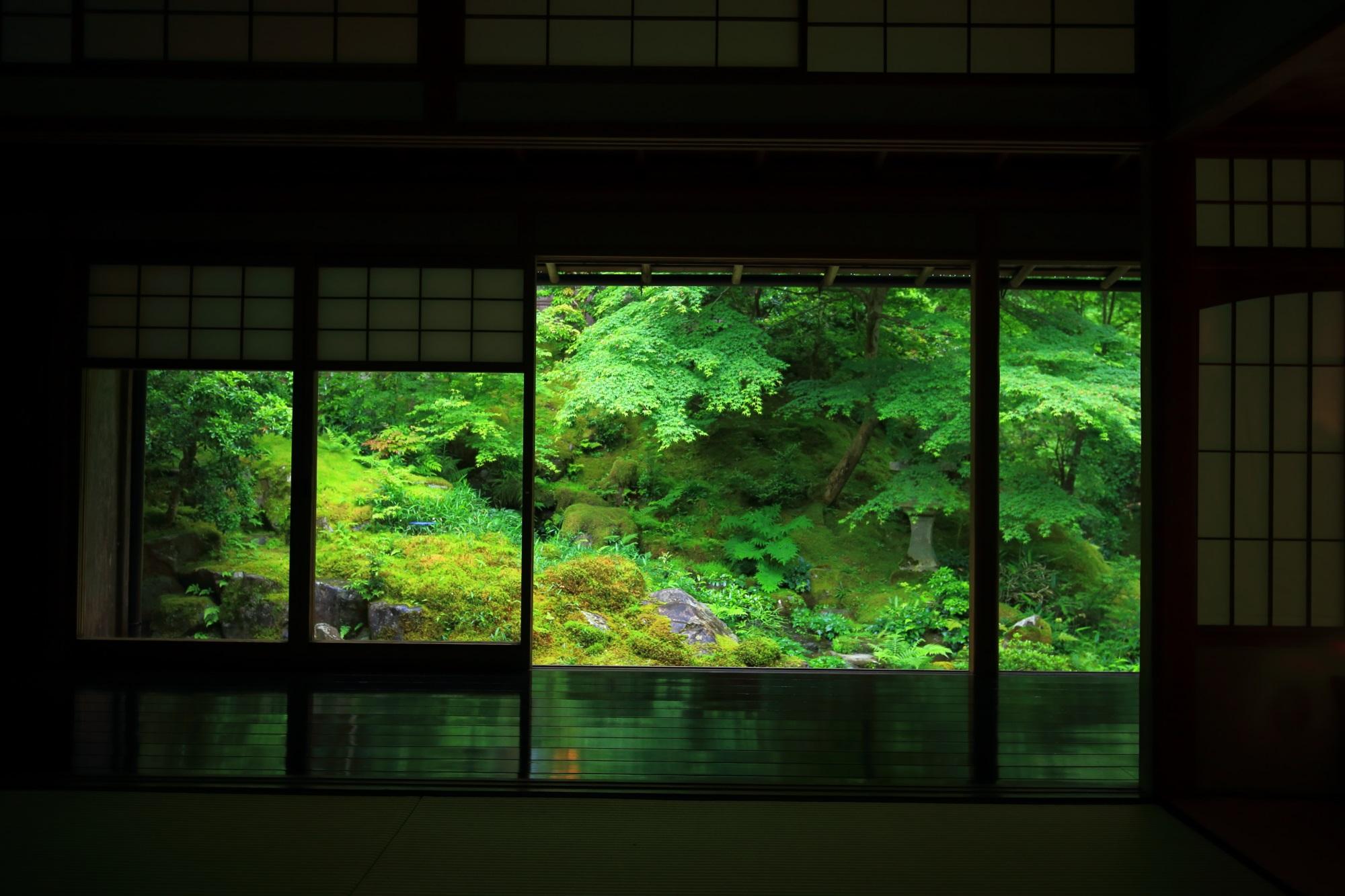 臥龍の庭 瑠璃光院 新緑 苔