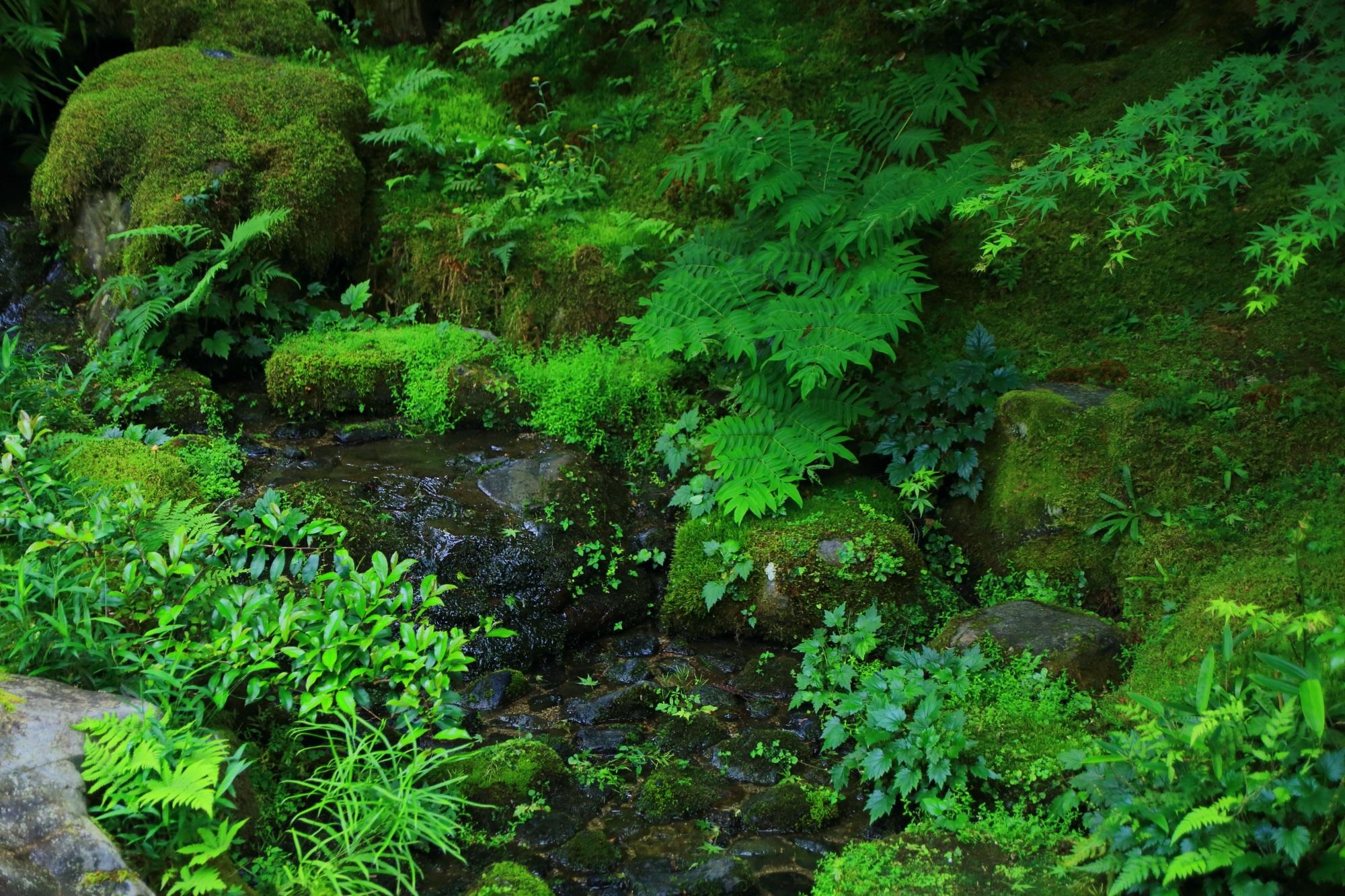臥龍の庭 瑠璃光院 苔 シダ 緑 綺麗