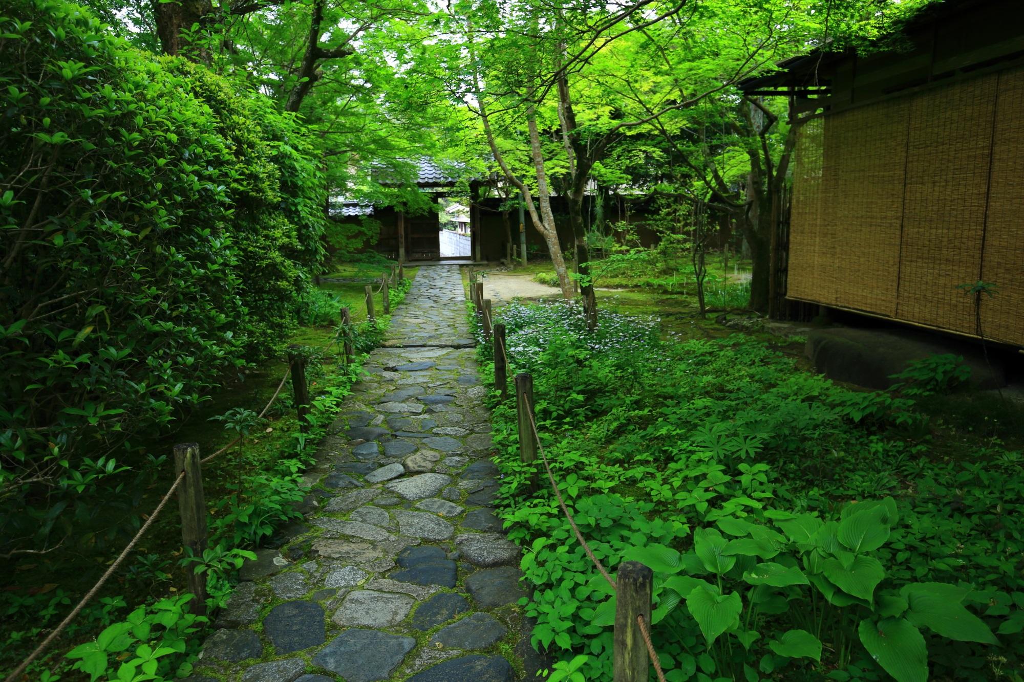 京都蓮華寺の苔と緑につつまれた参道