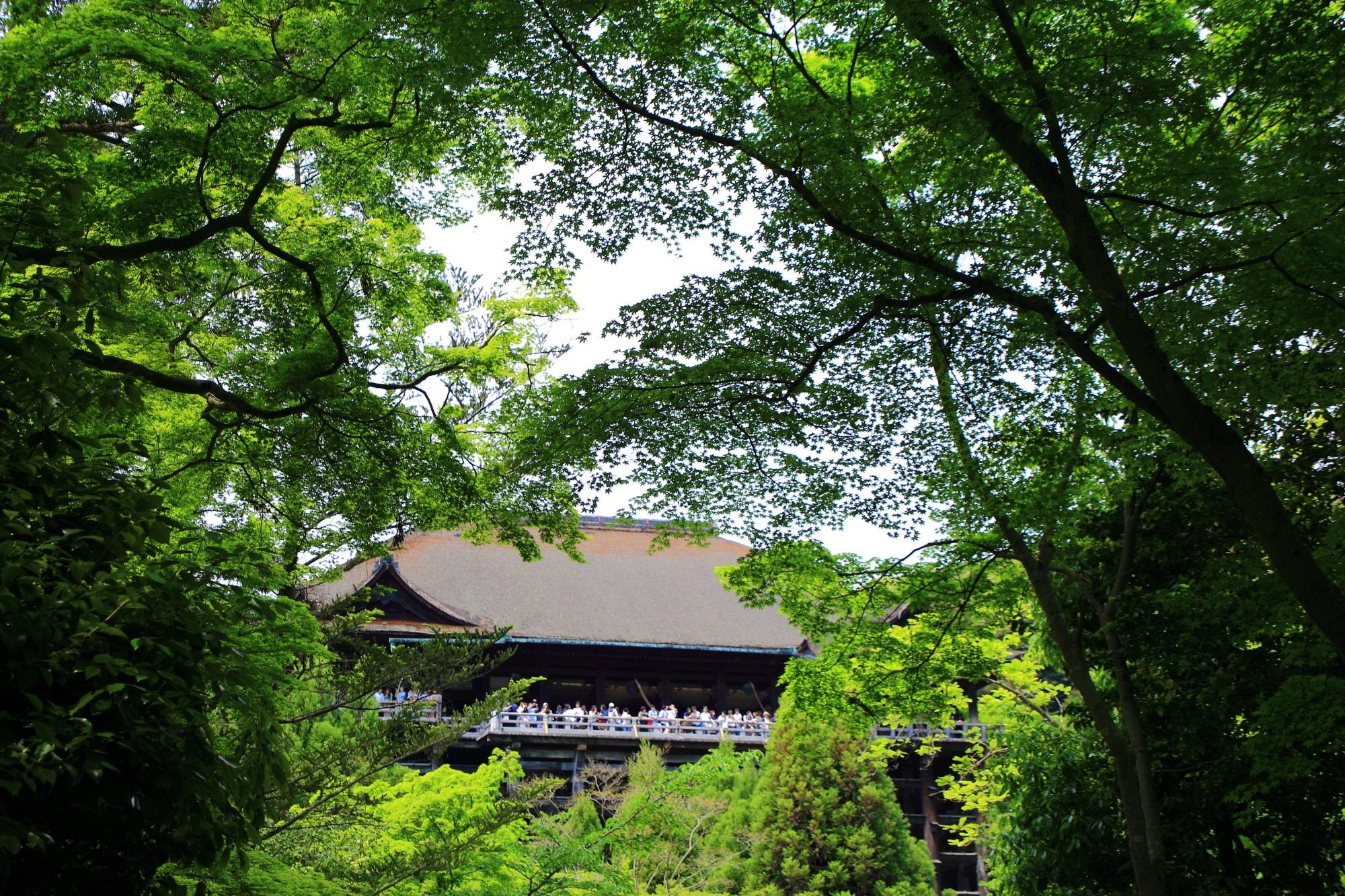 写真 清水の舞台 高画質 新緑 清水寺