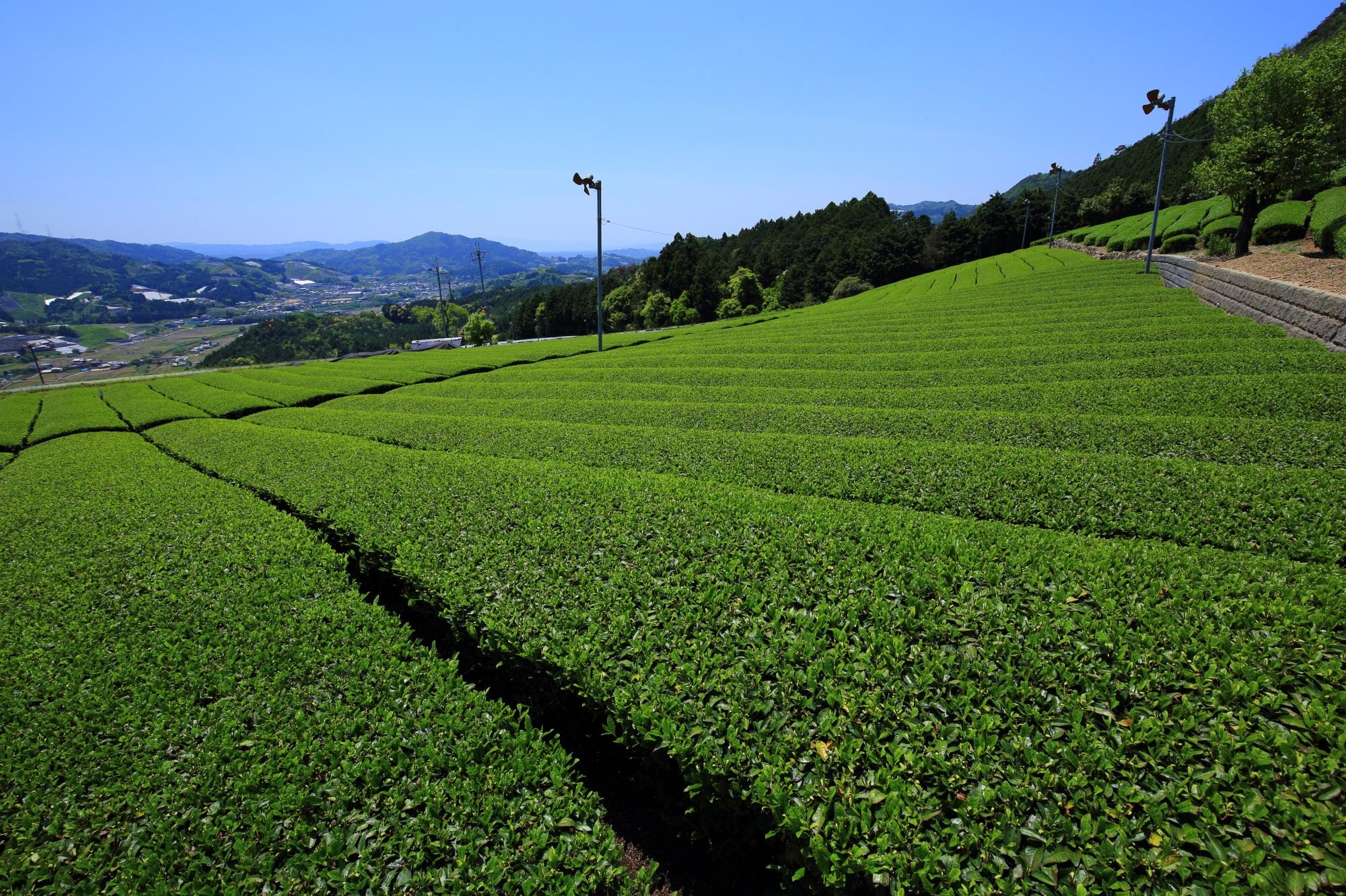 Kyoto Soraku-gun Wazuka-cho tea plantation