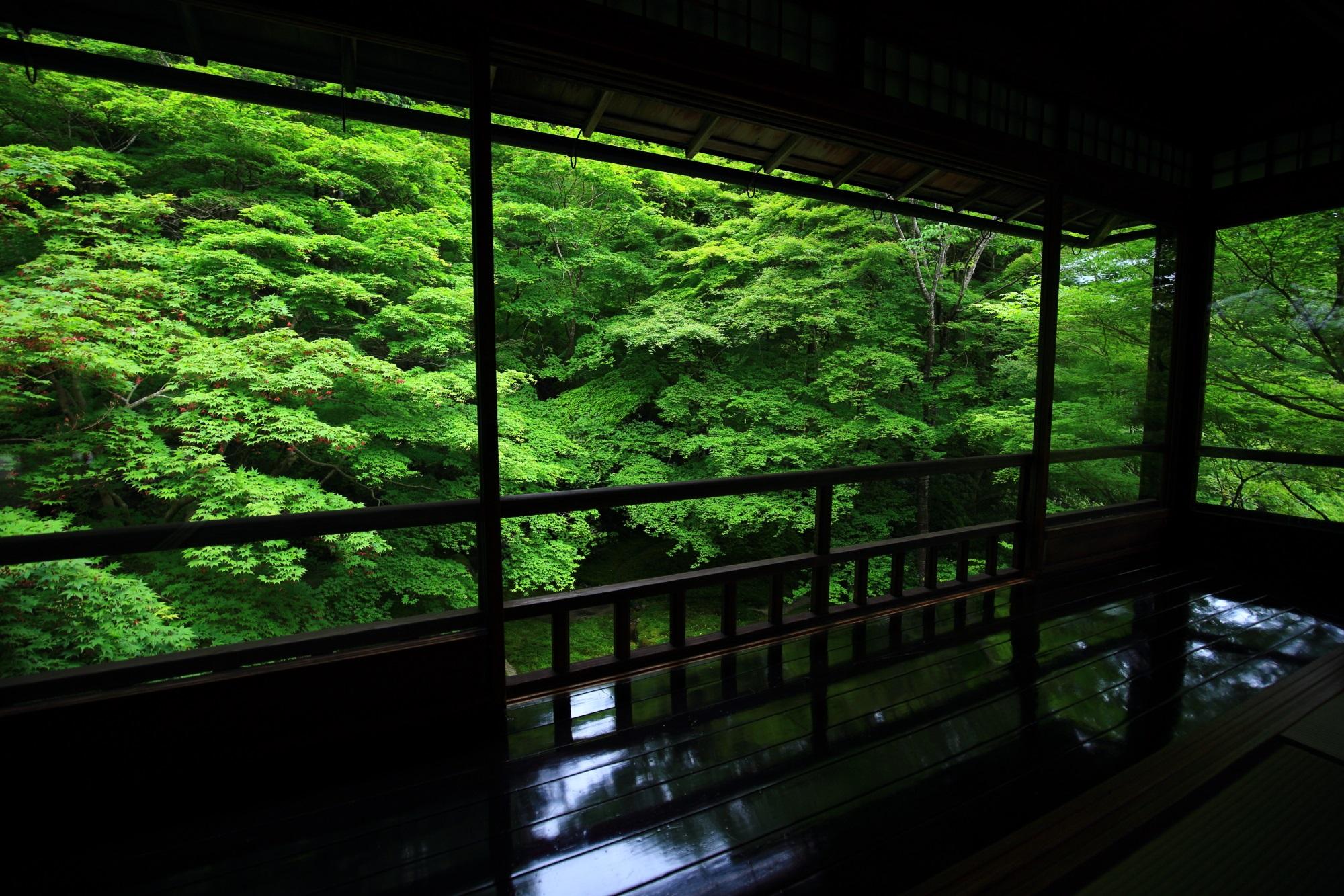 京都八瀬の秘境の瑠璃光院の綺麗な新緑と青もみじ