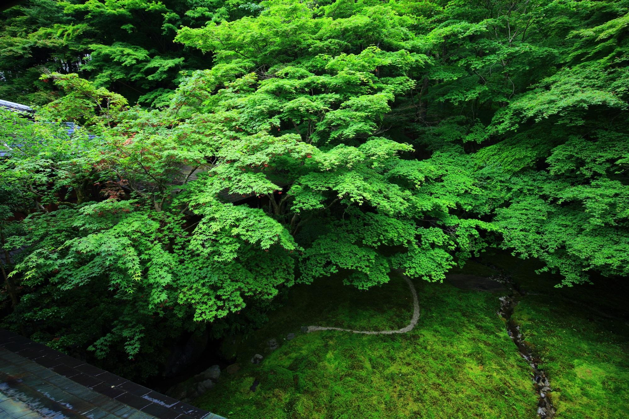 瑠璃光院 写真 高画質 青もみじ 新緑 瑠璃の庭