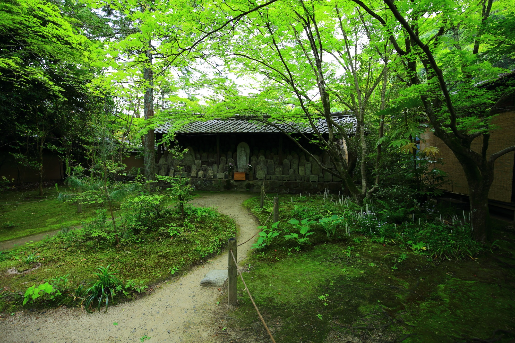 蓮華寺の百体地蔵と綺麗な新緑