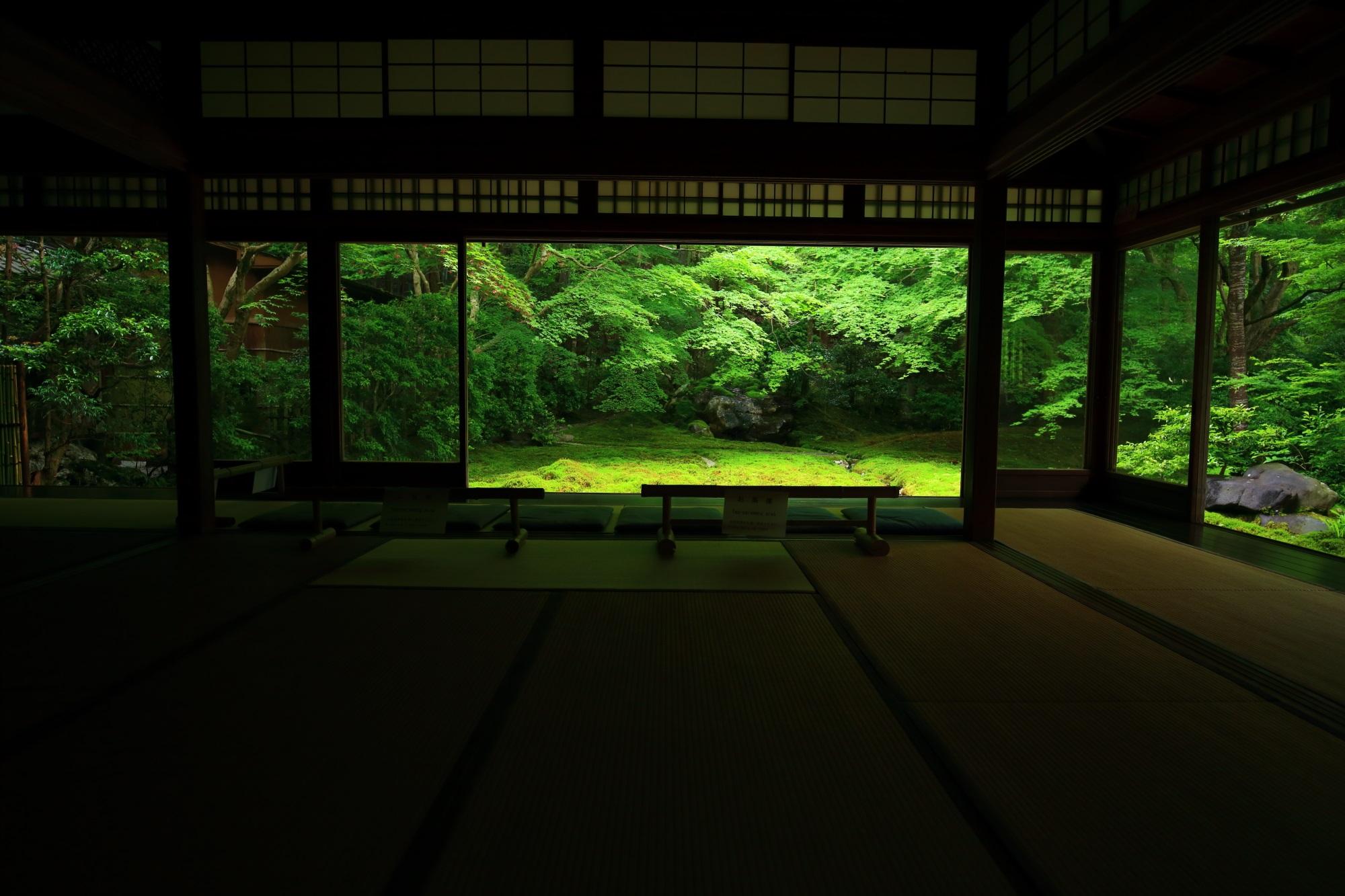 瑠璃光院(るりこういん)の新緑と苔の瑠璃の庭