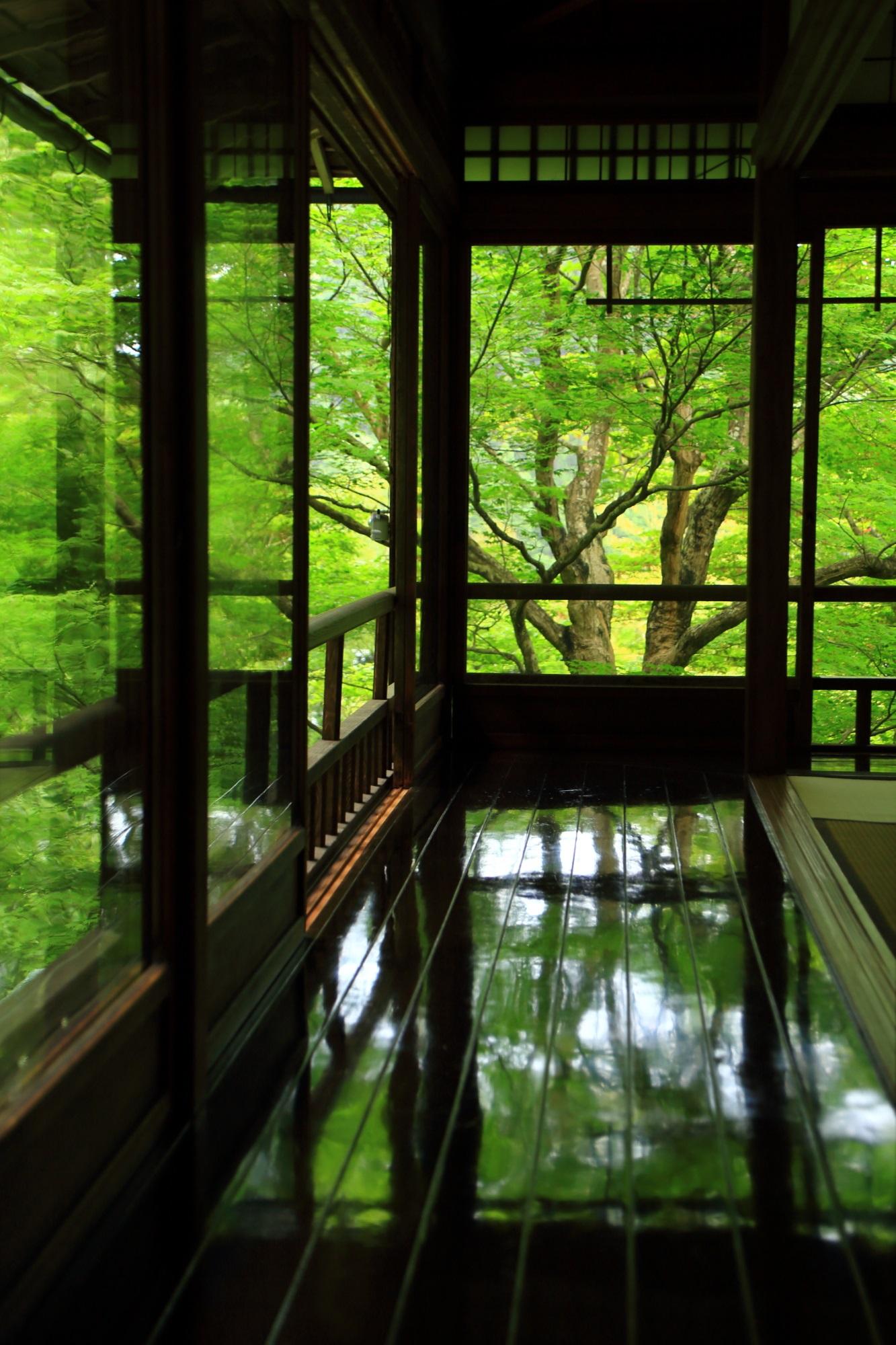廊下に映る瑠璃光院の見事な新緑