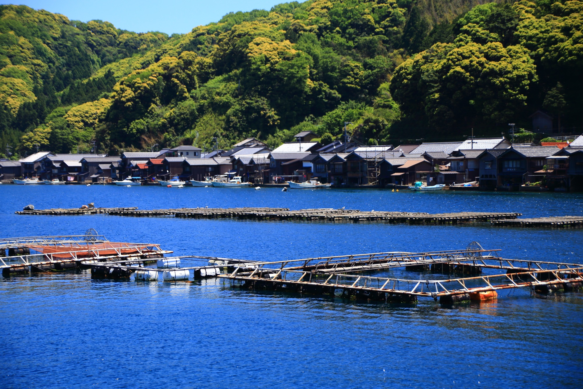 伊根の舟屋の牡蠣の養殖
