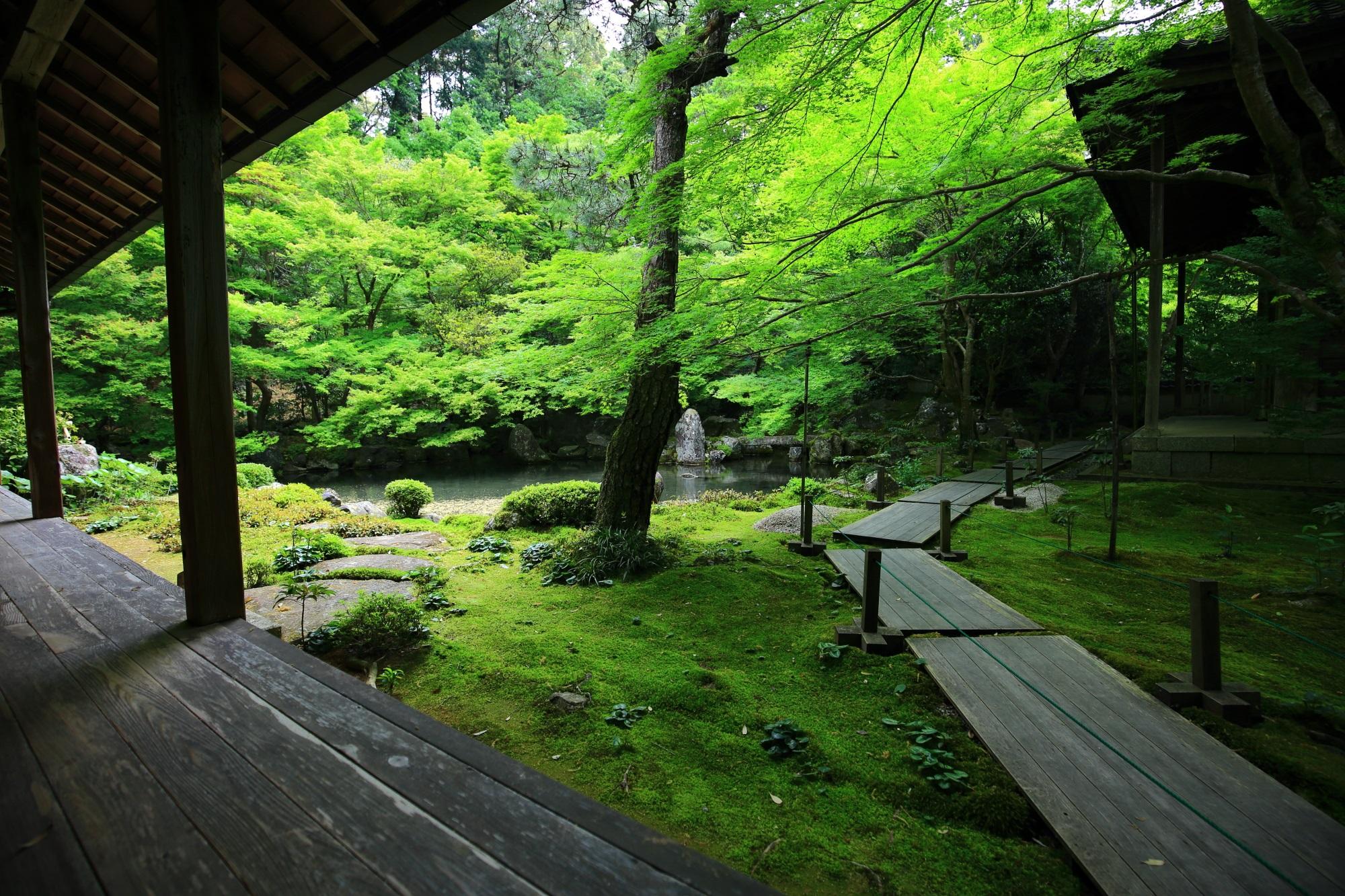 れんげじ 青もみじ 苔 庭園 緑