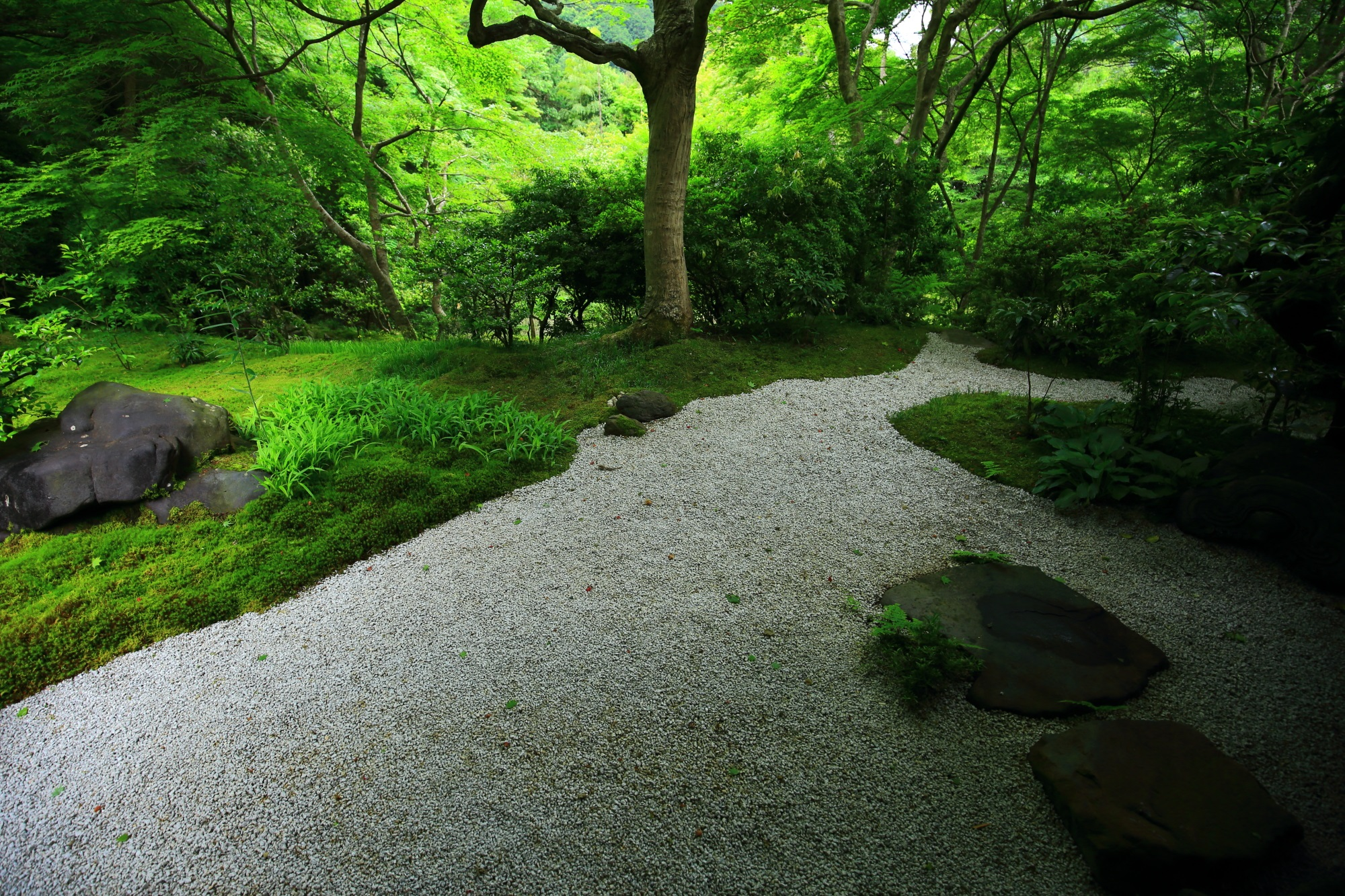 瑠璃光院の美しい白砂と苔の庭園
