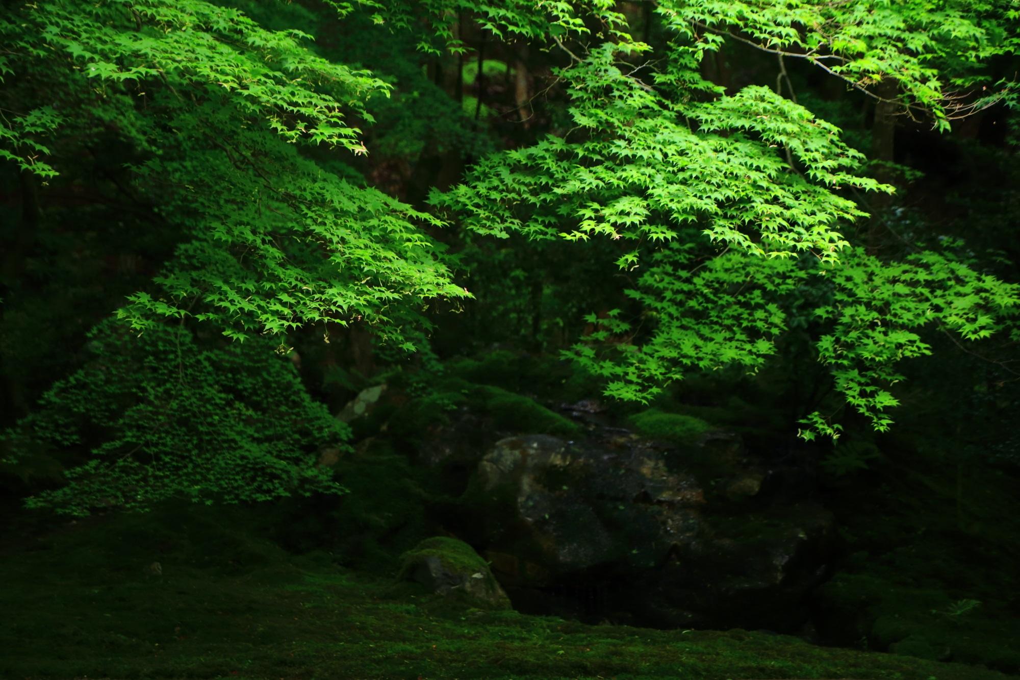 八瀬瑠璃光院の美しい緑の瑠璃の庭