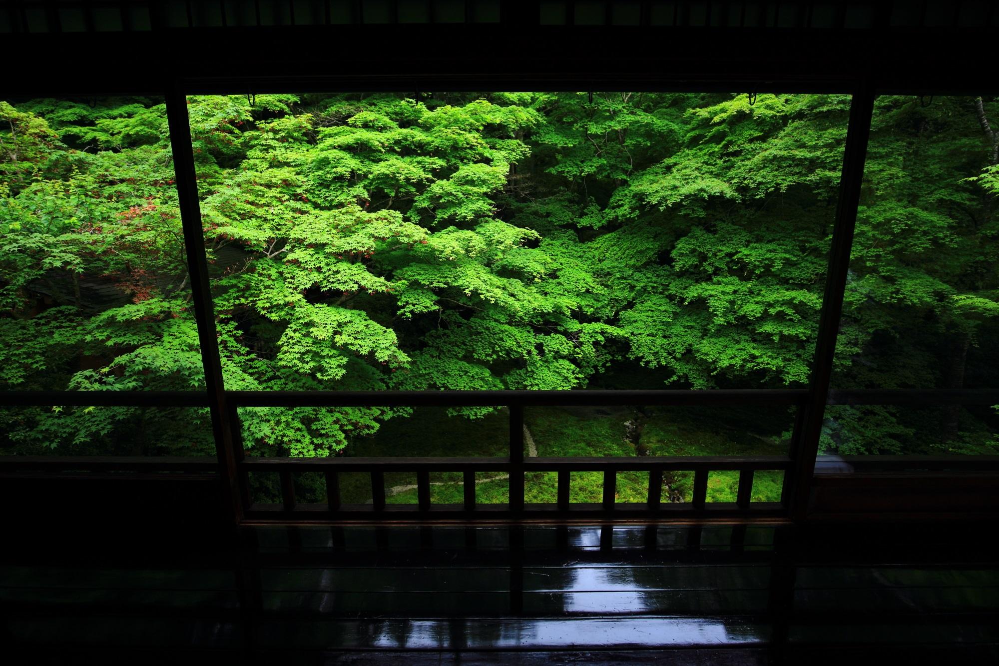 青もみじ 瑠璃光院 圧巻 瑠璃の庭