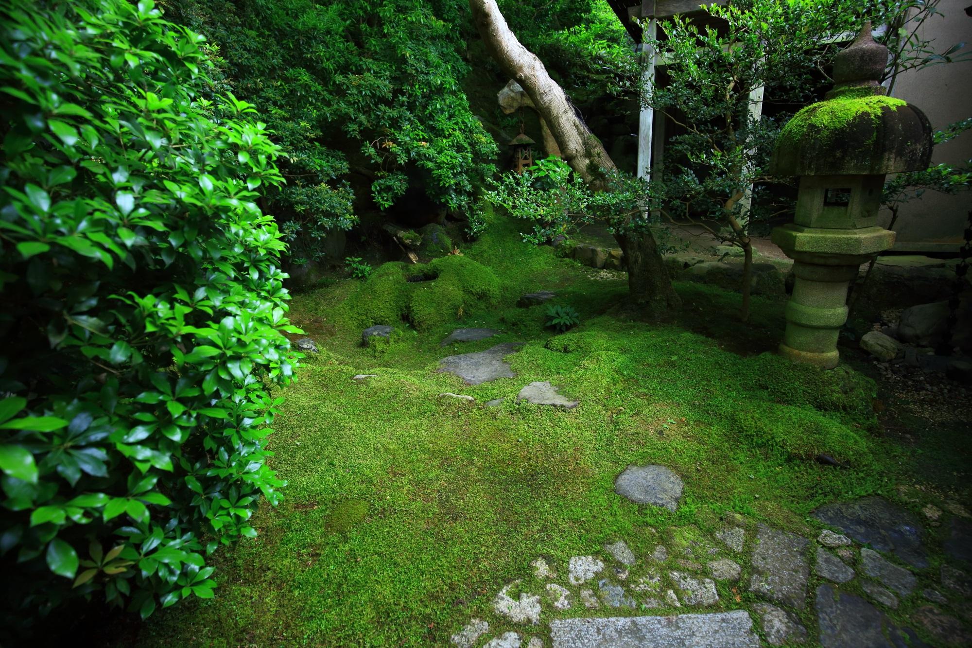 瑠璃光院の茶庵 喜鶴亭前の素晴らしい苔と灯籠