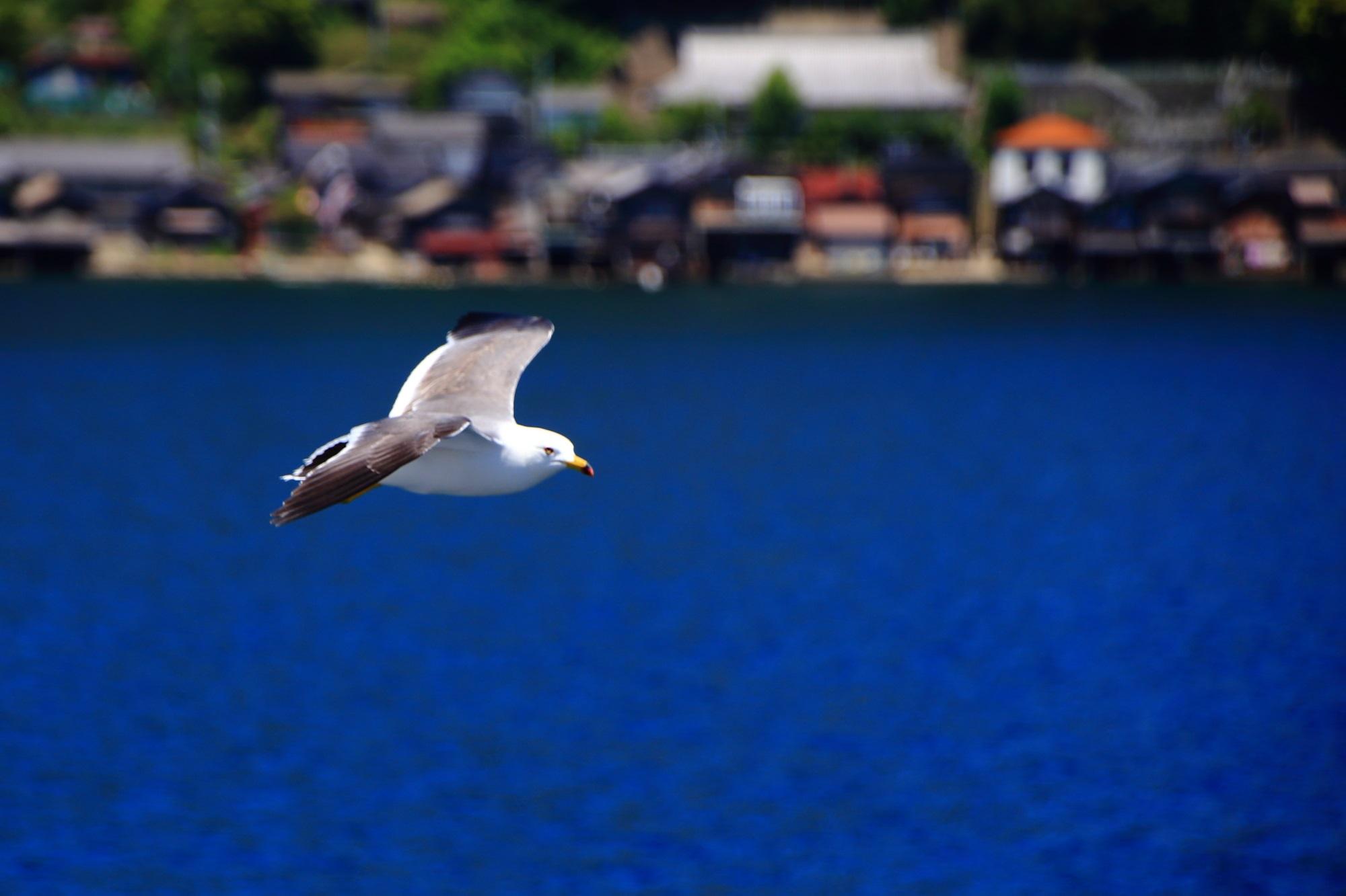 船と同じ速度で飛んでくれる伊根湾のカモメ