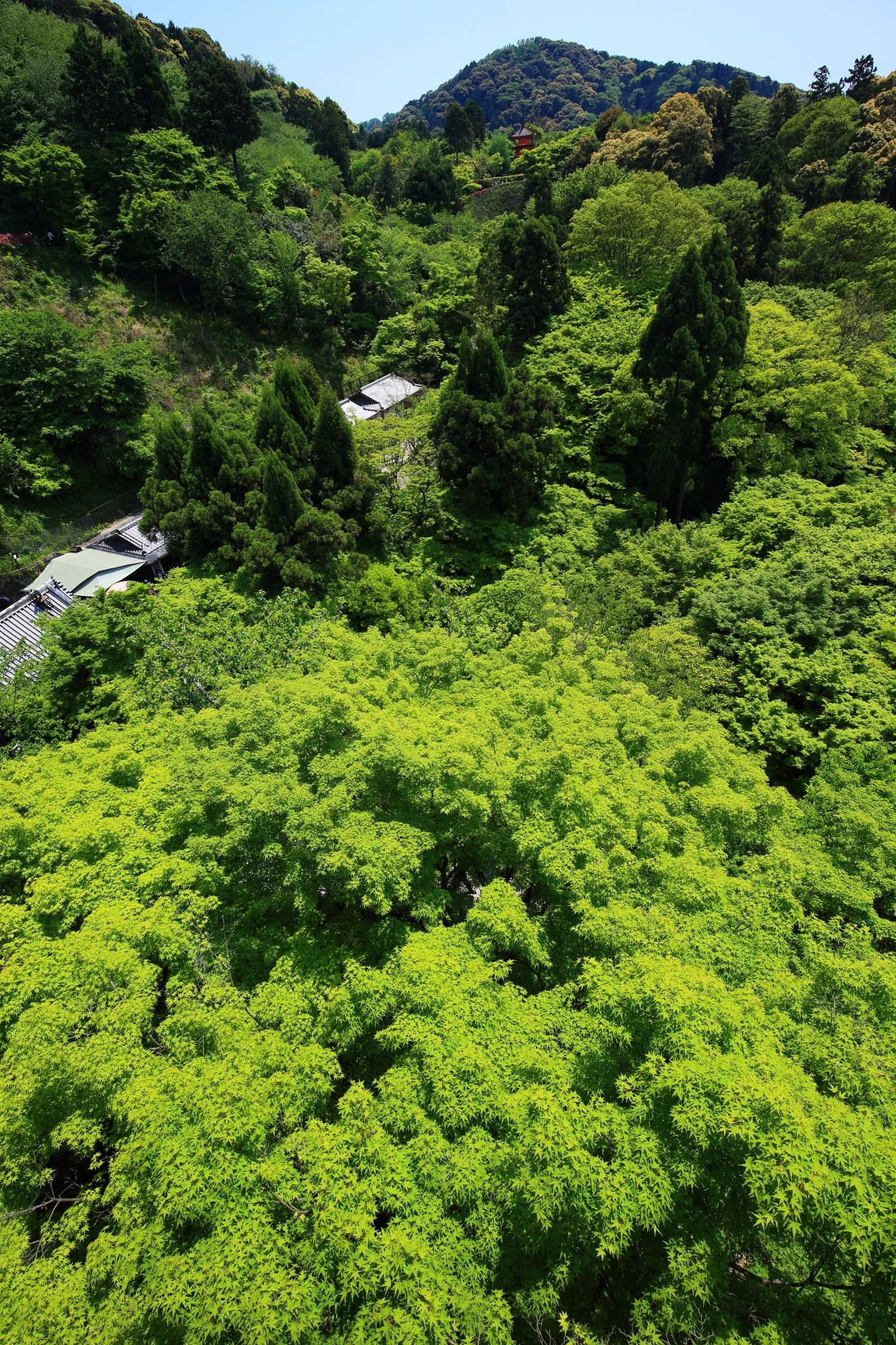 清水寺の舞台から眺める一面の新緑